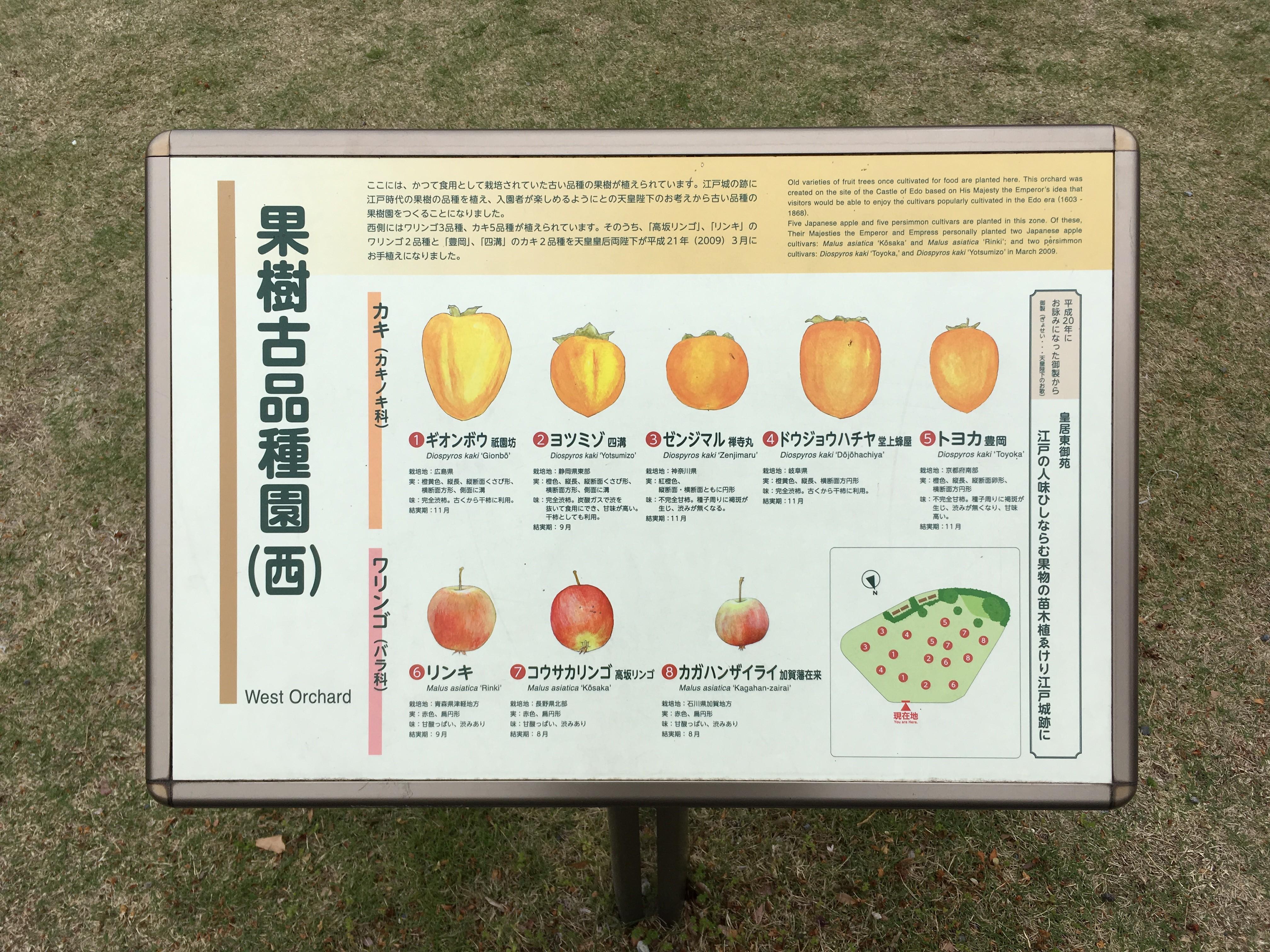 果樹古品種園(西)