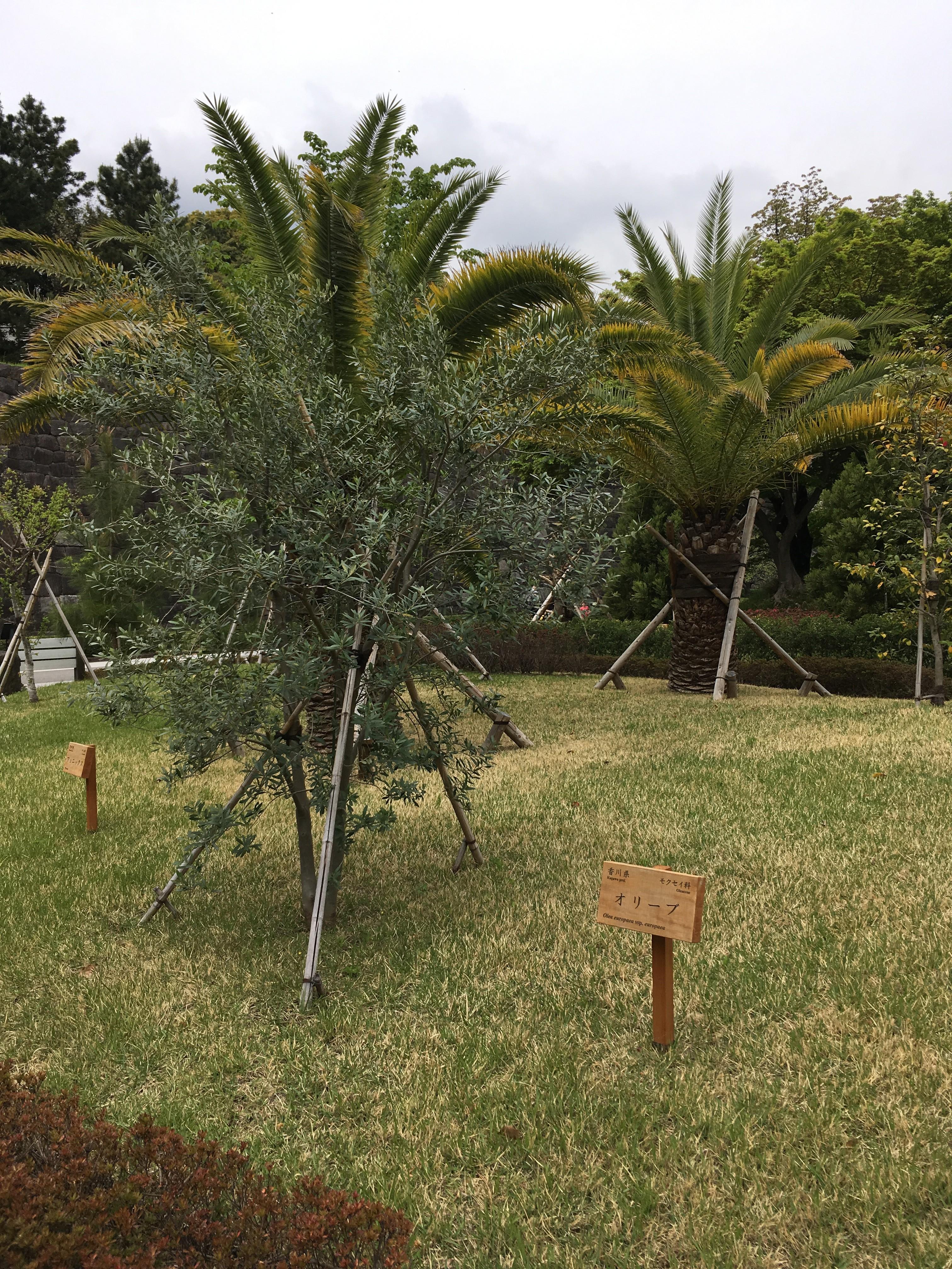 都道府県の木