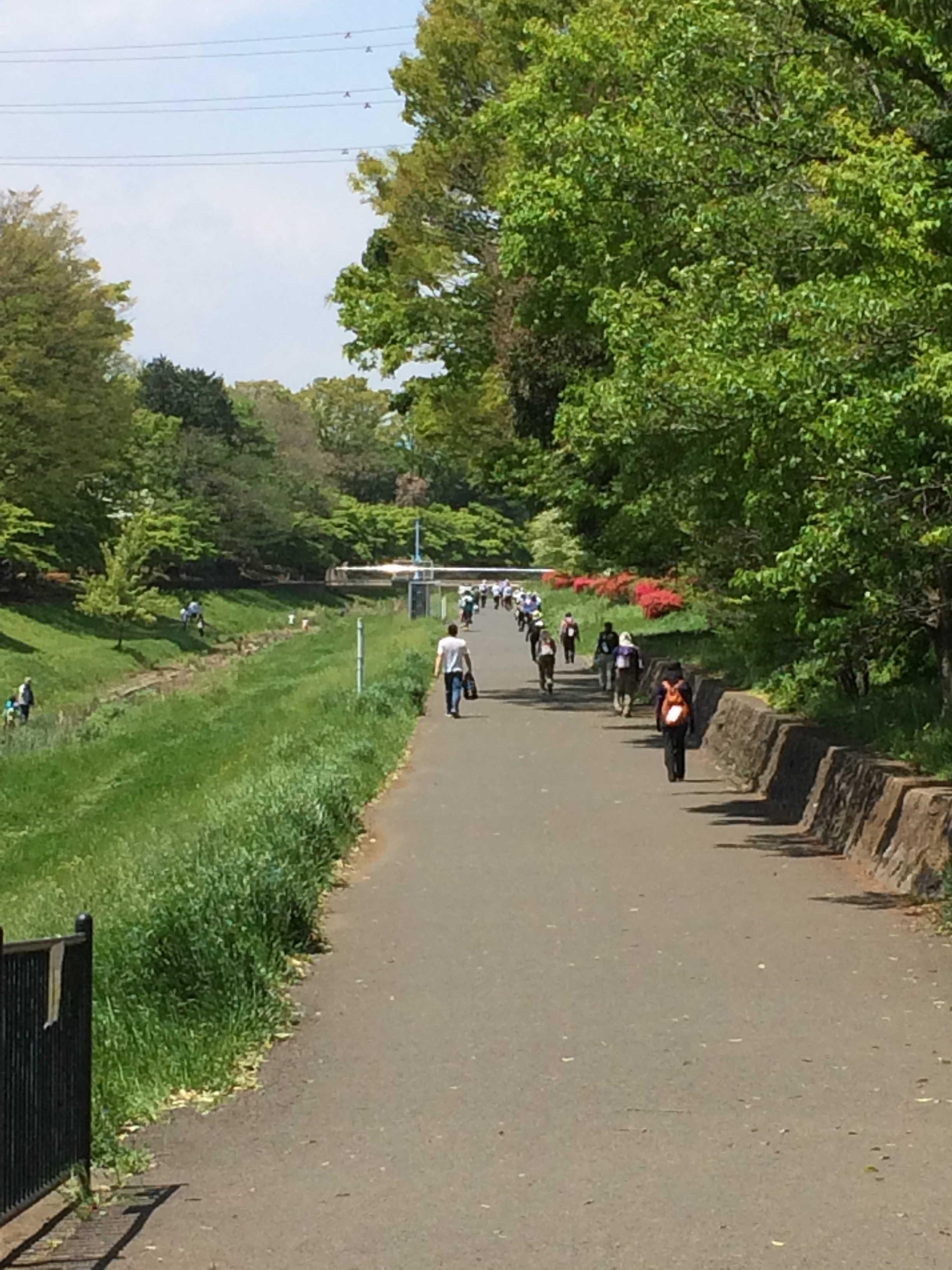野川沿いを歩く