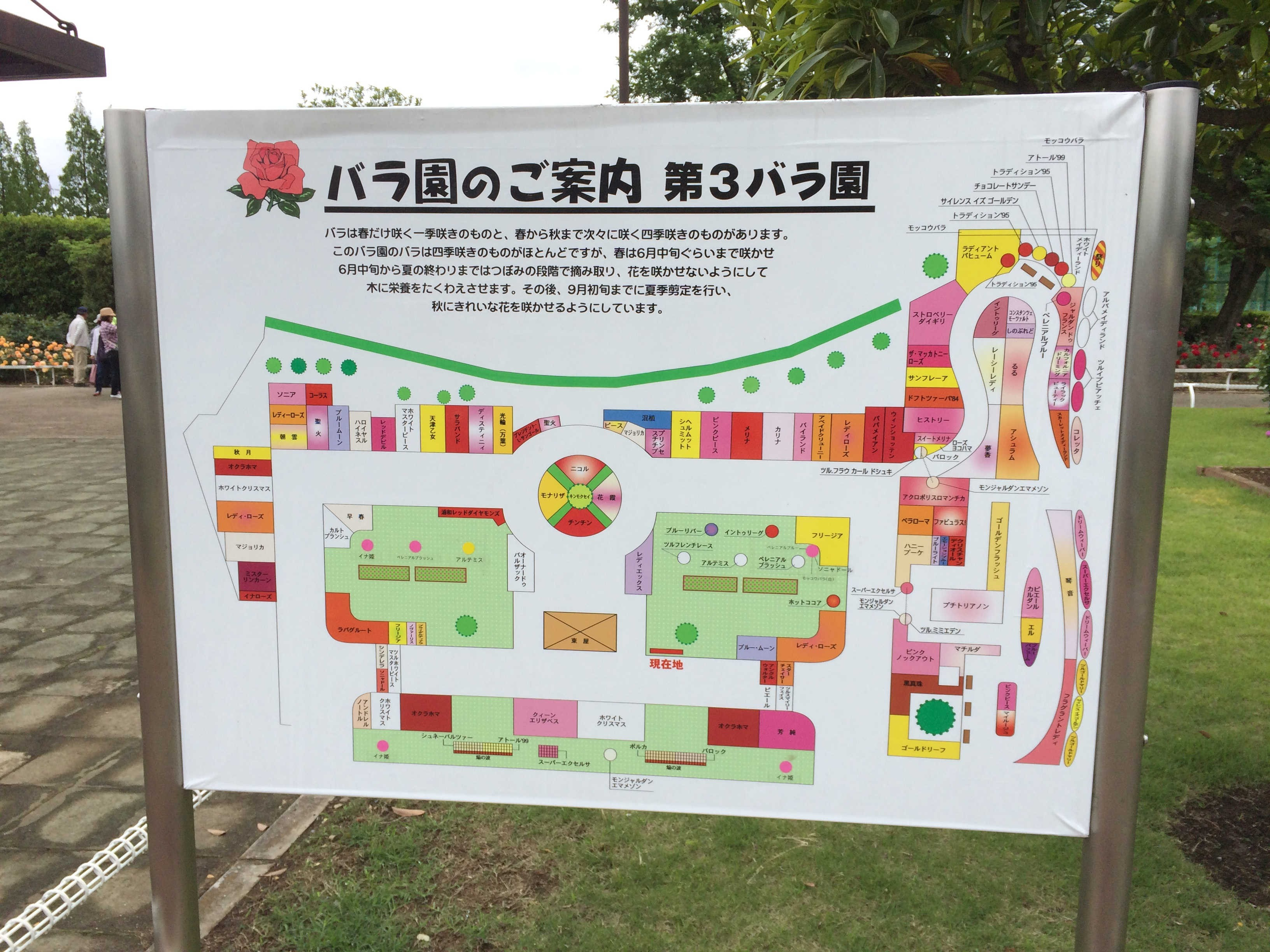 バラ園(町制施行記念公園)