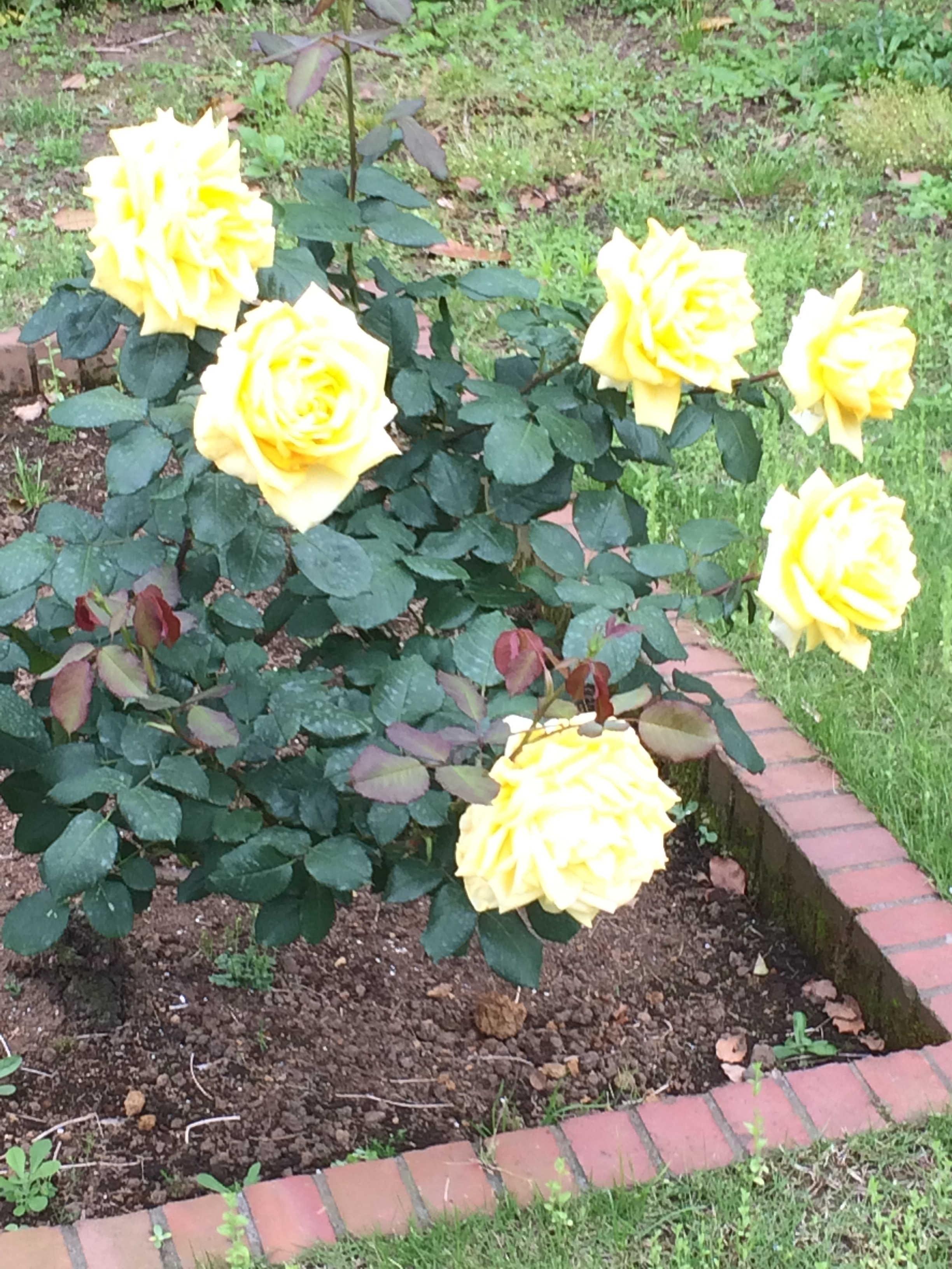 日比谷公園第一花壇