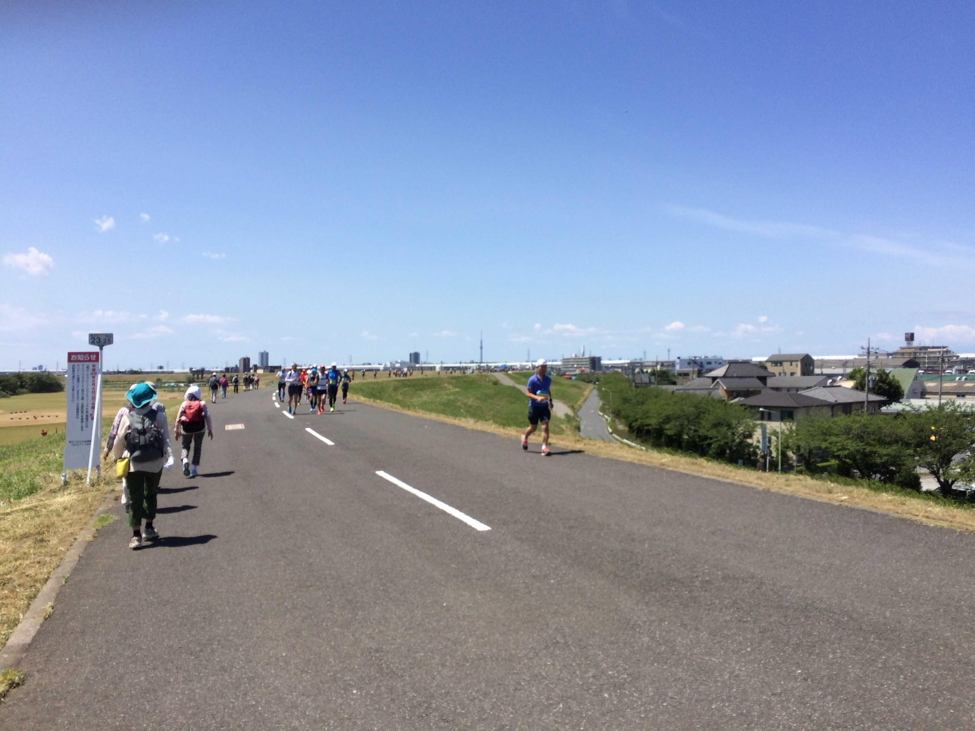 江戸川堤健康の道