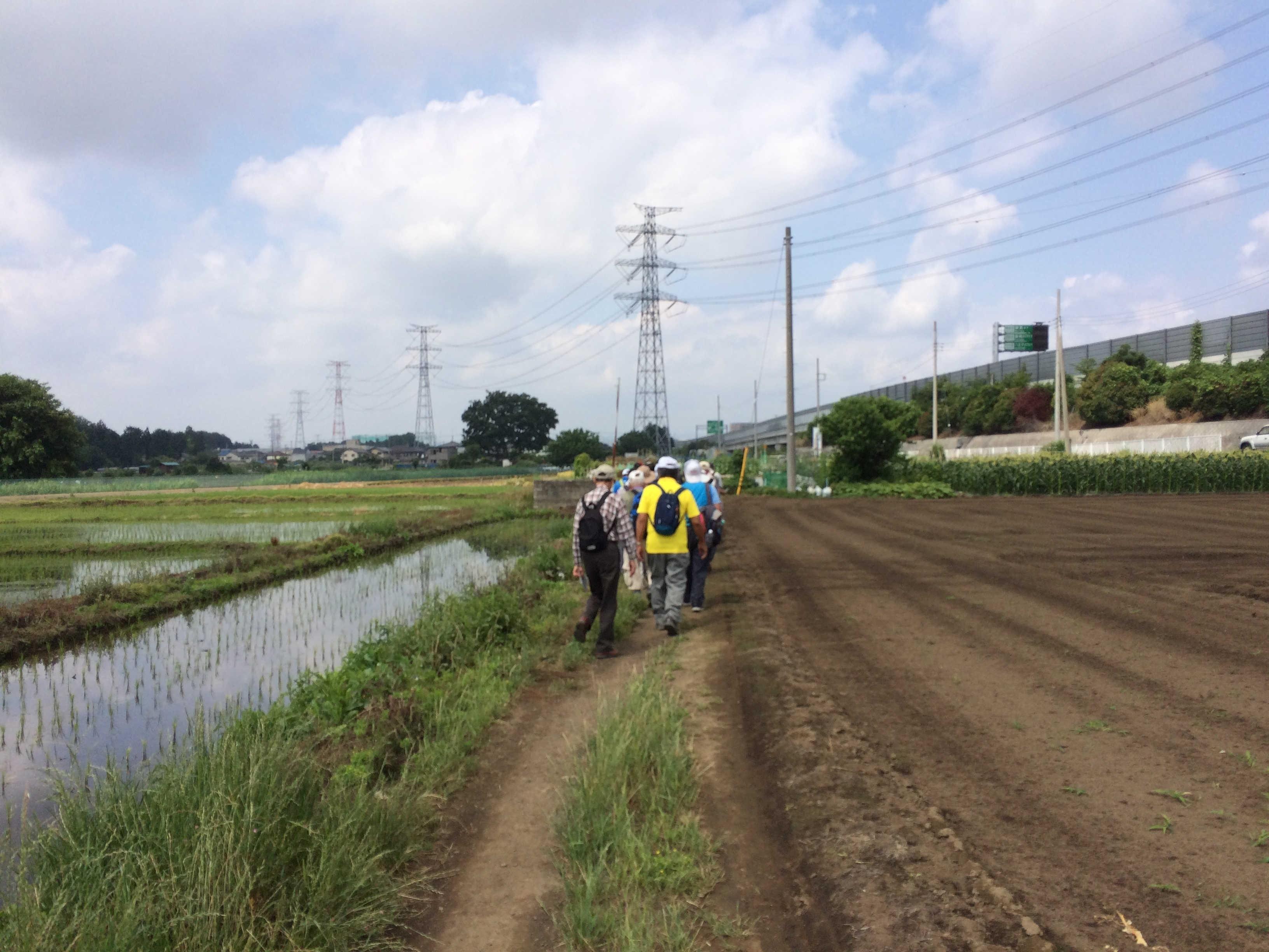 鶴ヶ島に残る田んぼ