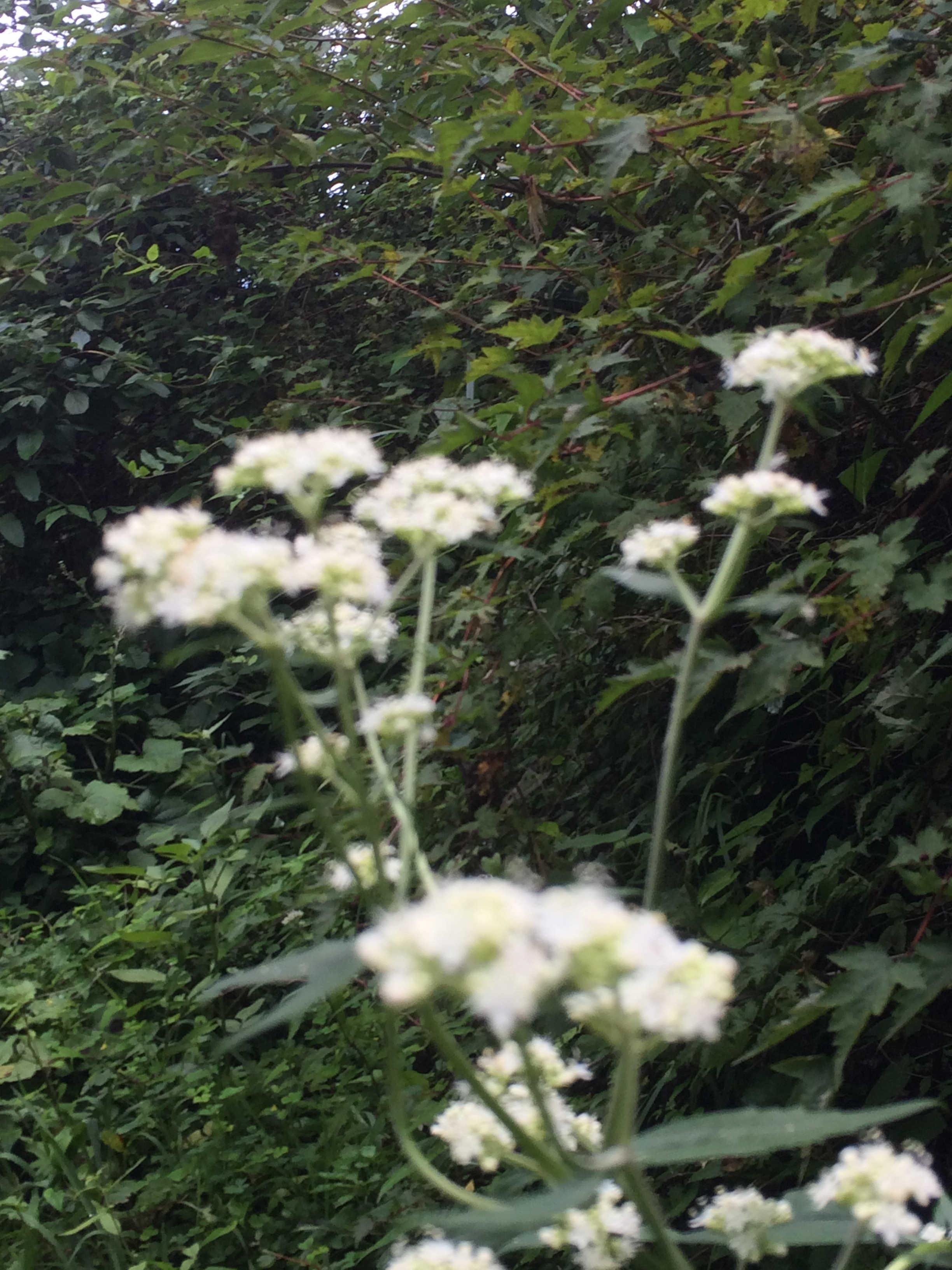 八月の草花
