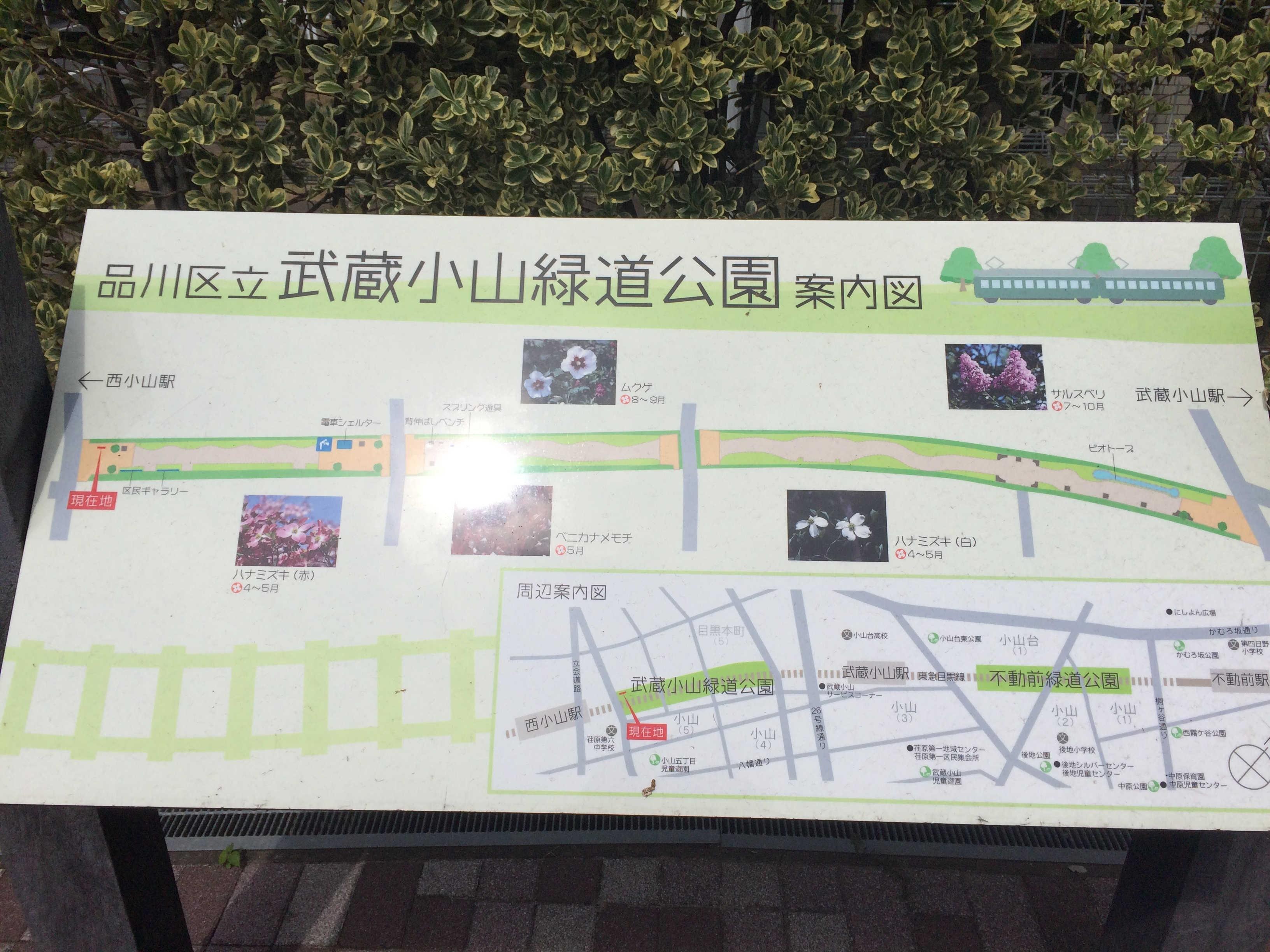 立会川緑道(桜並木)