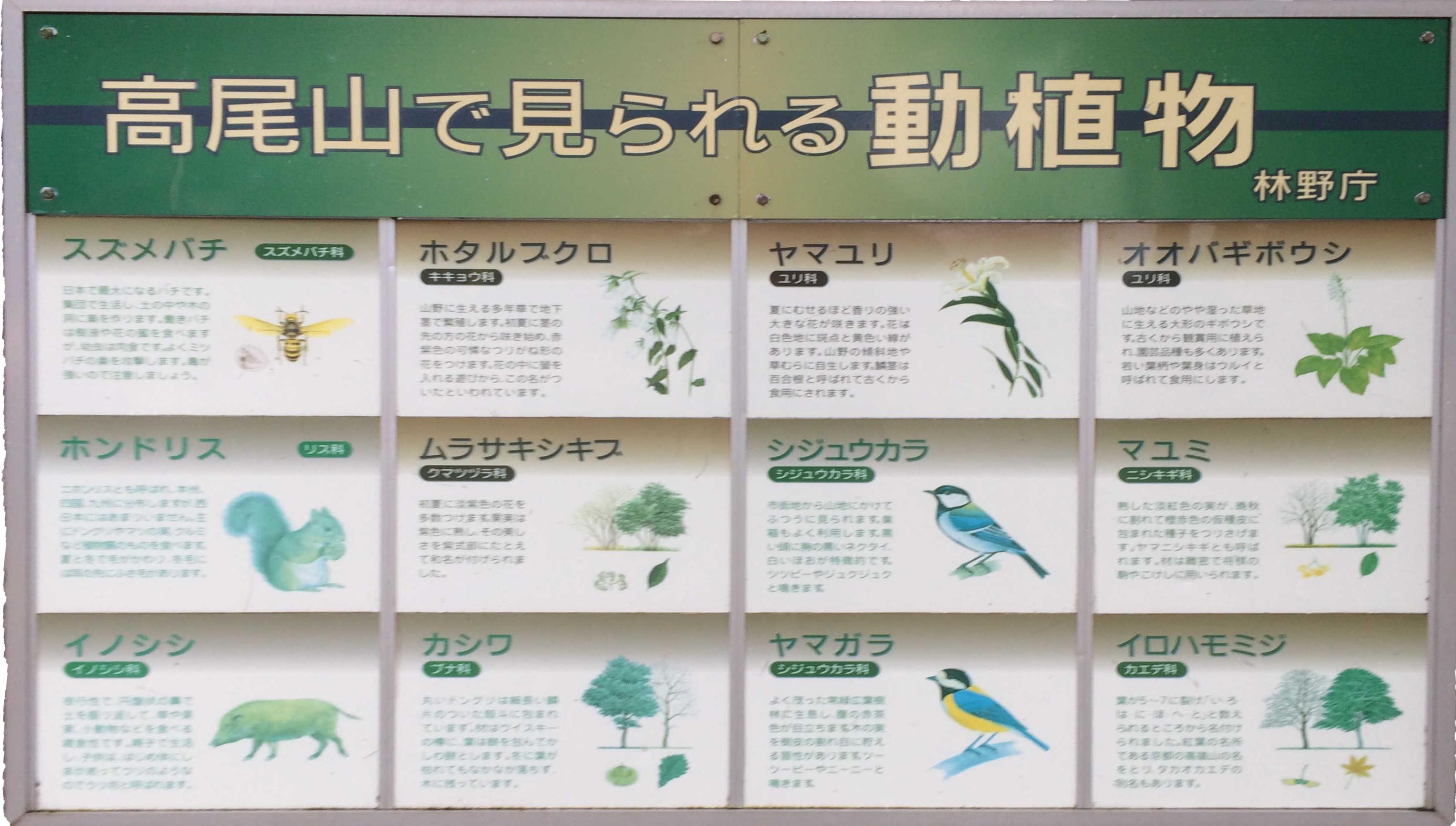高尾山で見られる動植物