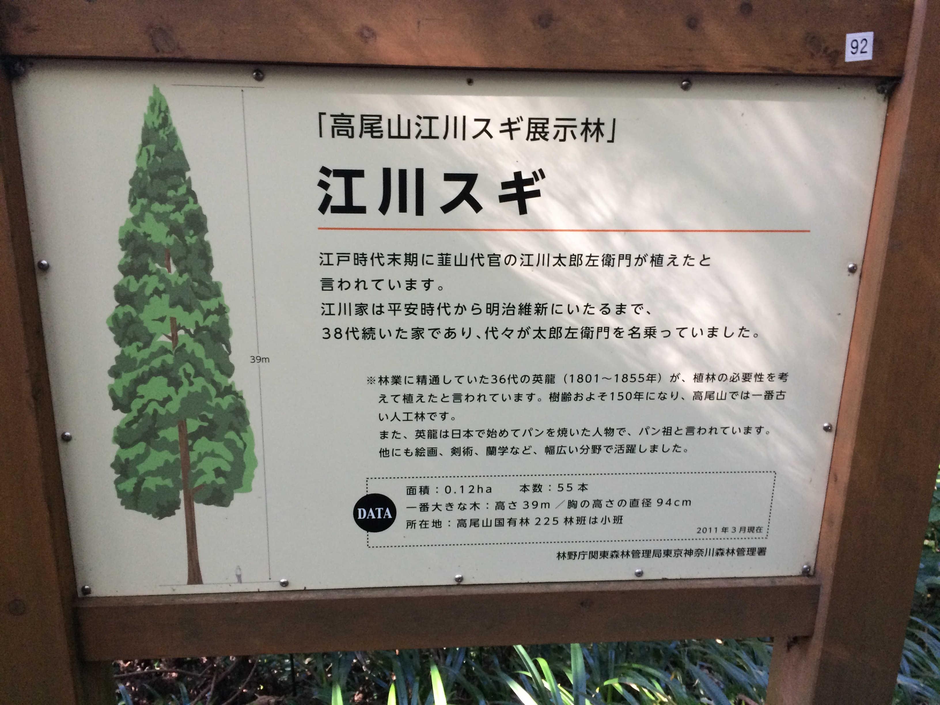 「高尾山江川スギ展示林」江川スギ
