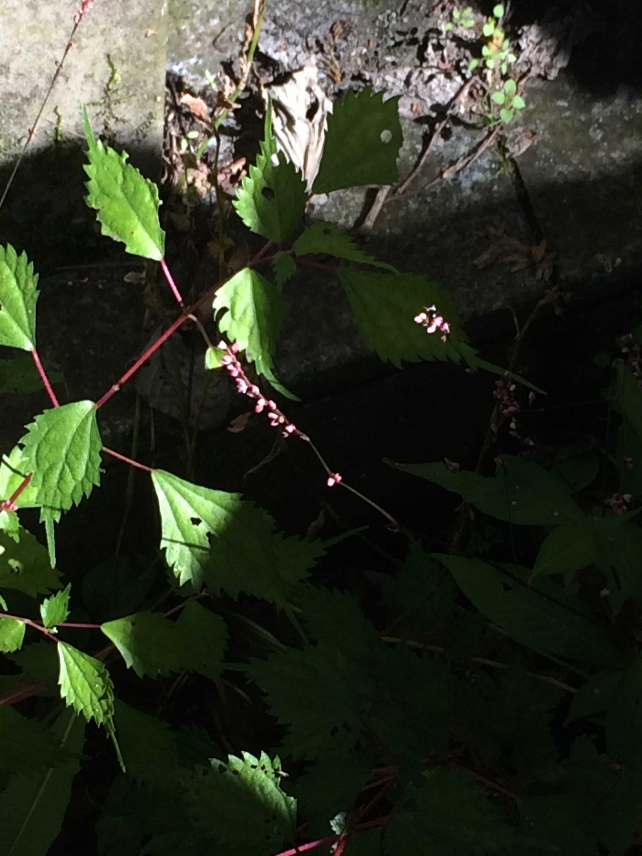 10月の高尾山の植物