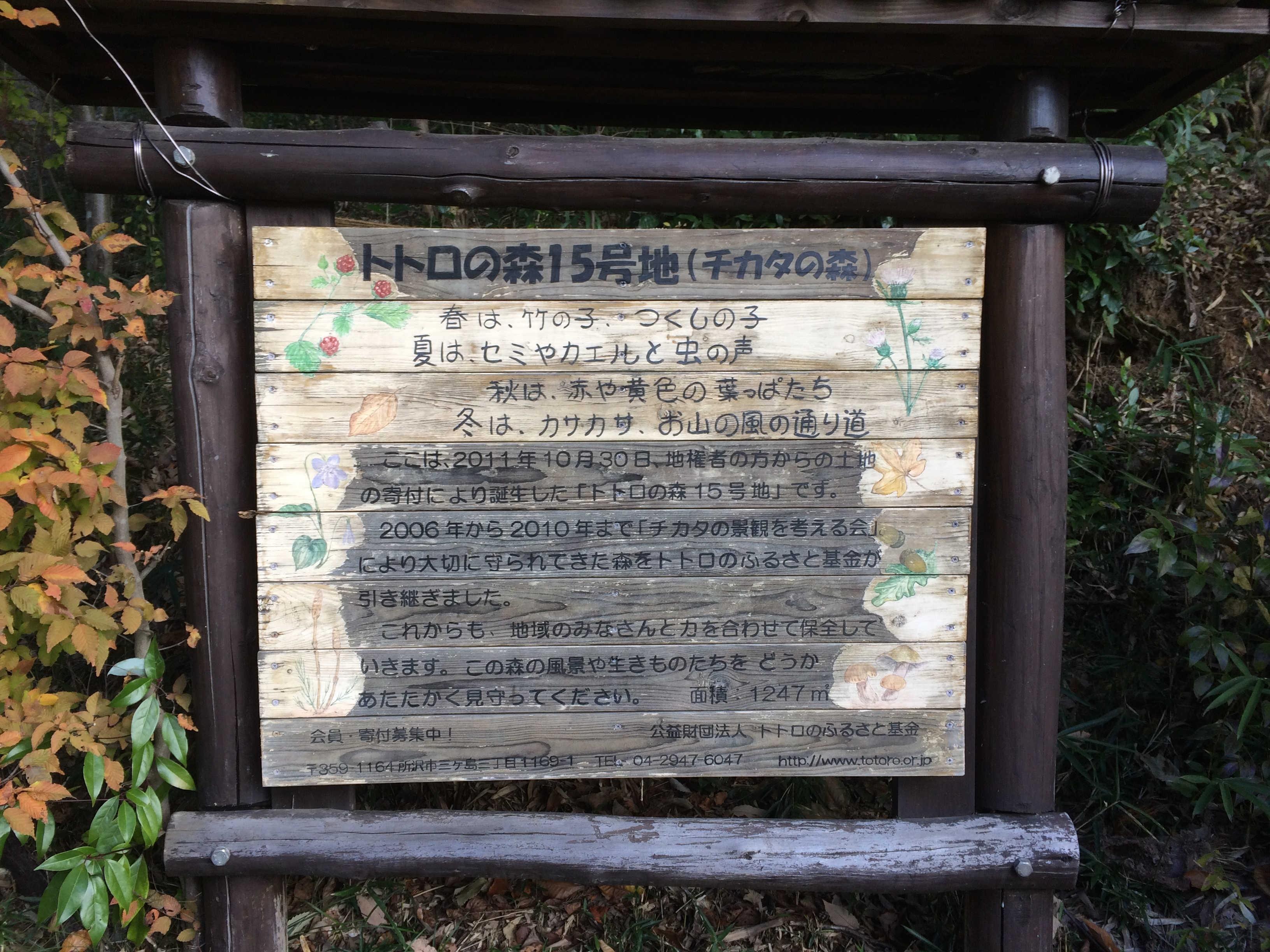 トトロの森15号地(チカタの森)