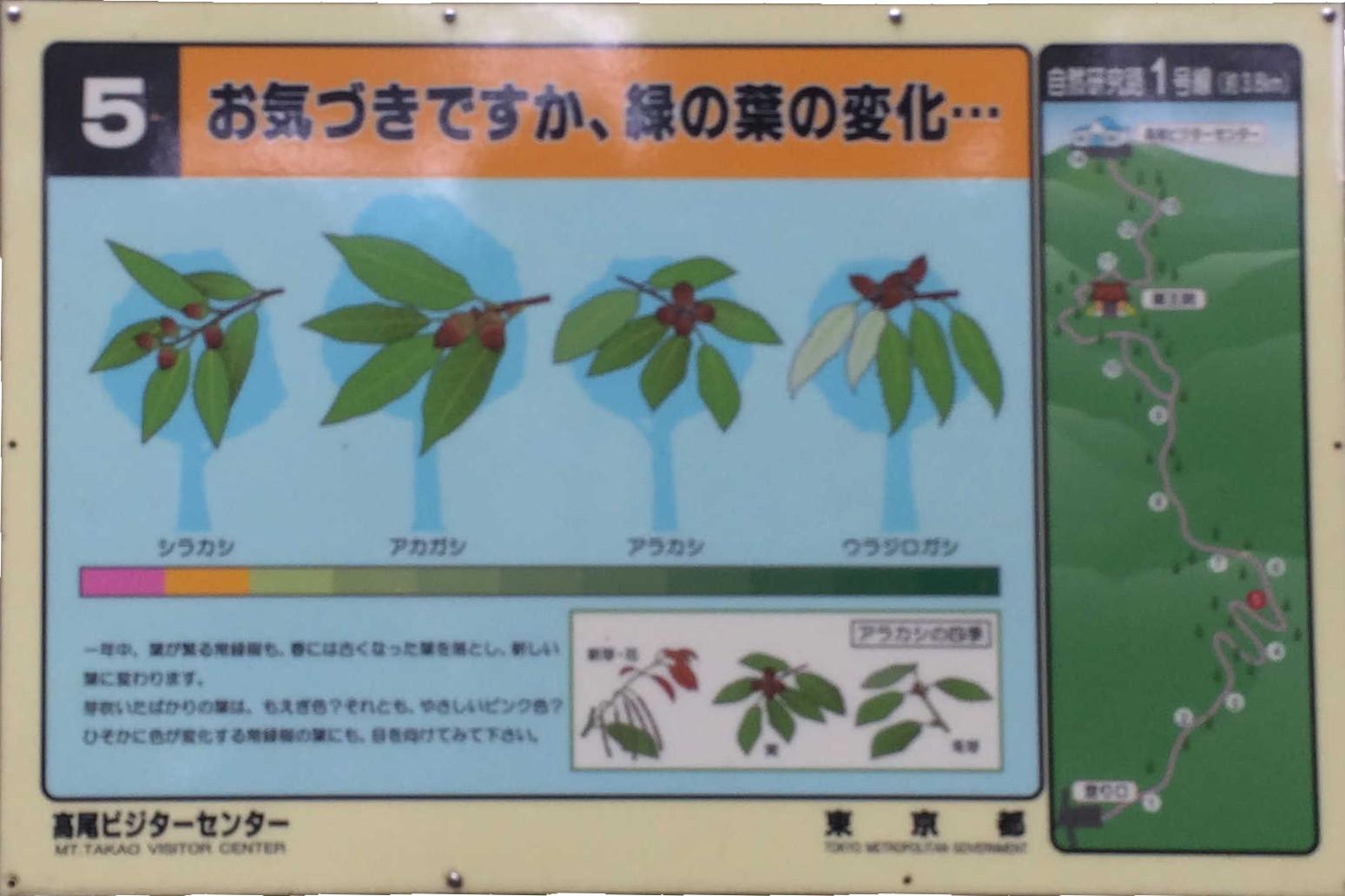 お気づきですか、緑の葉の変化・・・