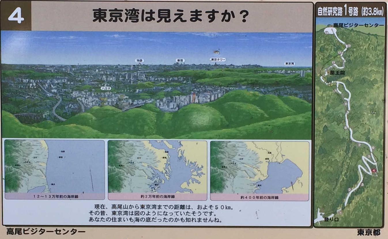 東京湾は見えますか?