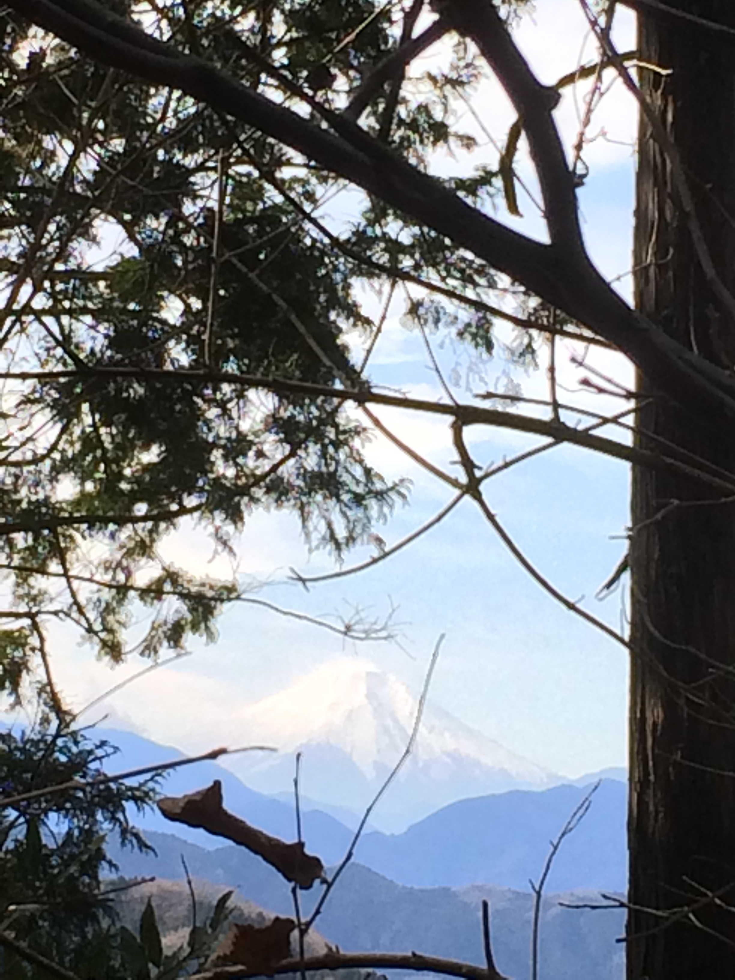 稲荷山コースから富士山を望む