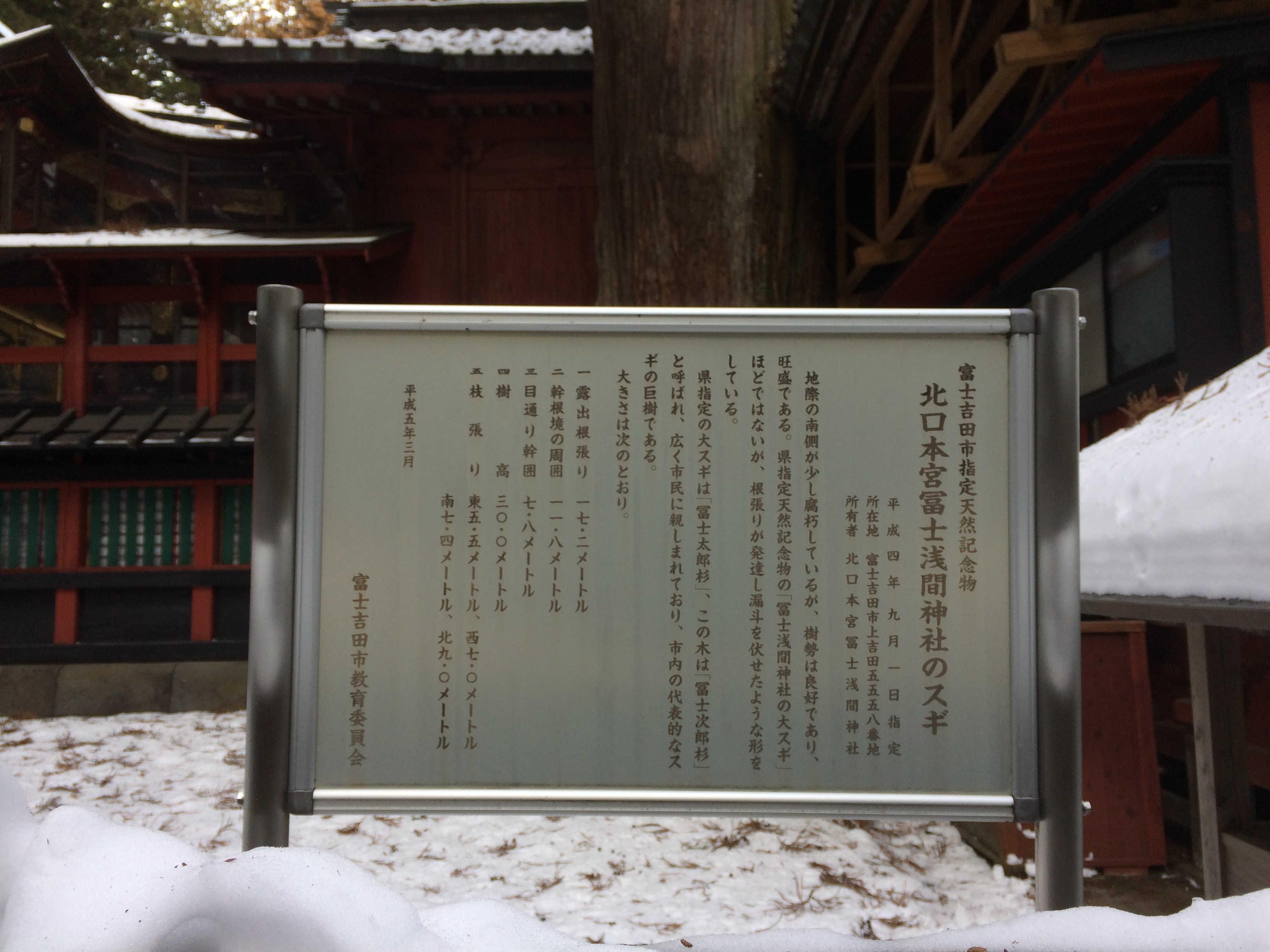 北口本宮富士浅間神社のスギ