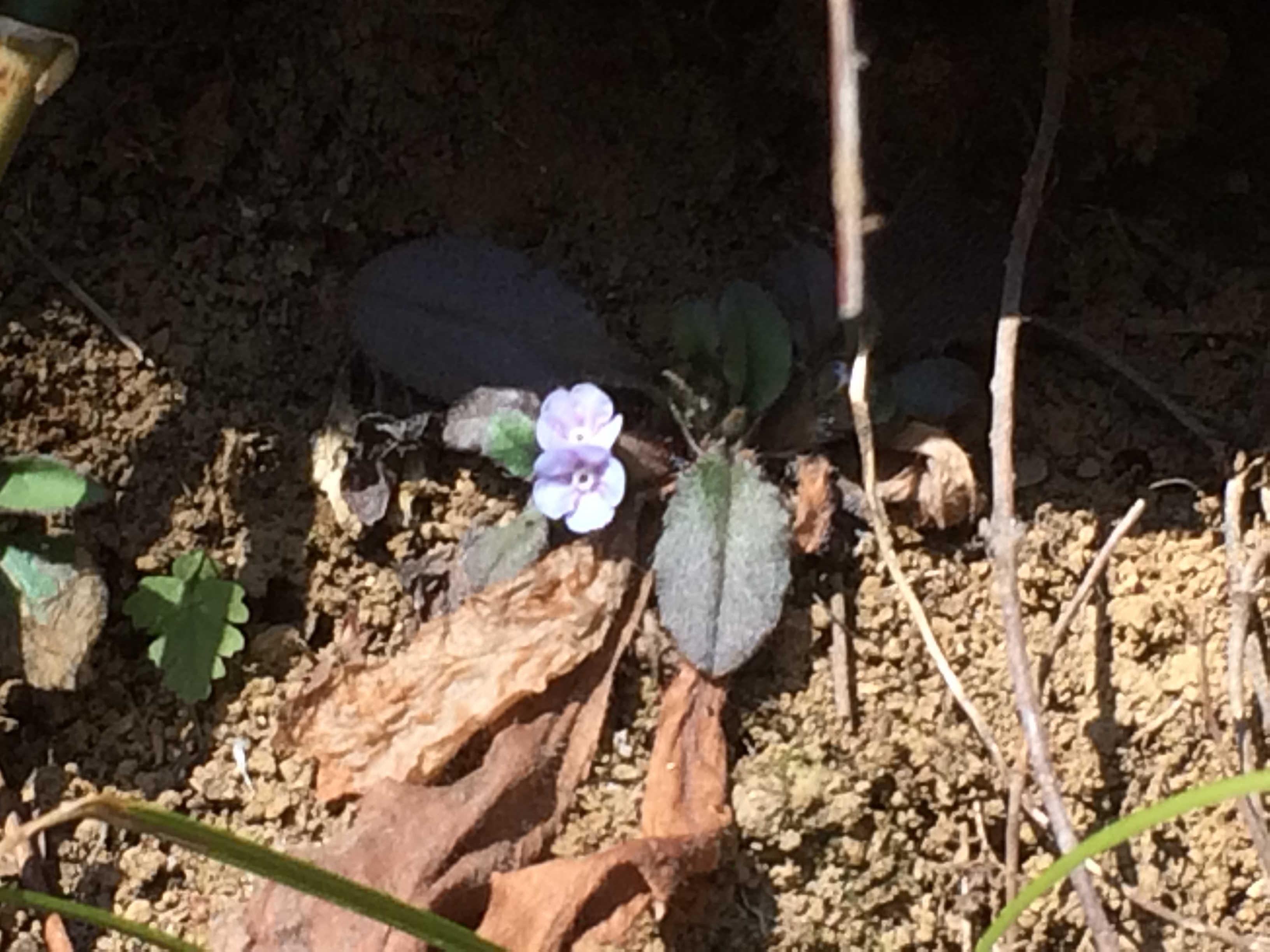高尾山の植物
