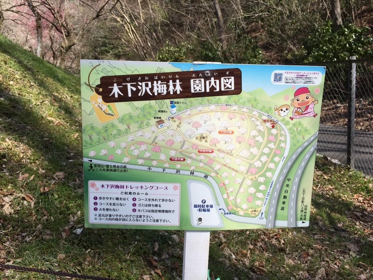 木下沢梅林園内図