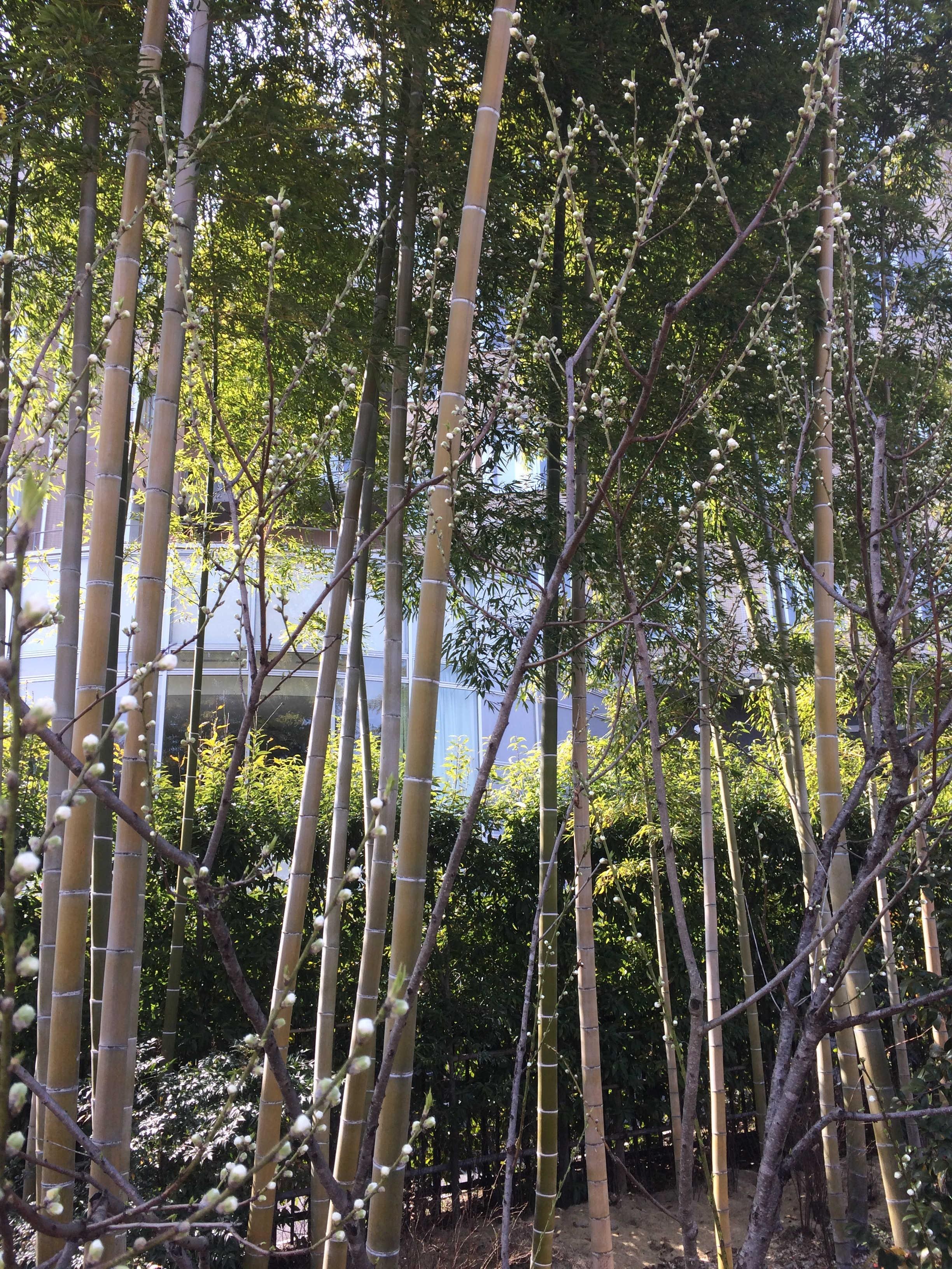 駒木野庭園