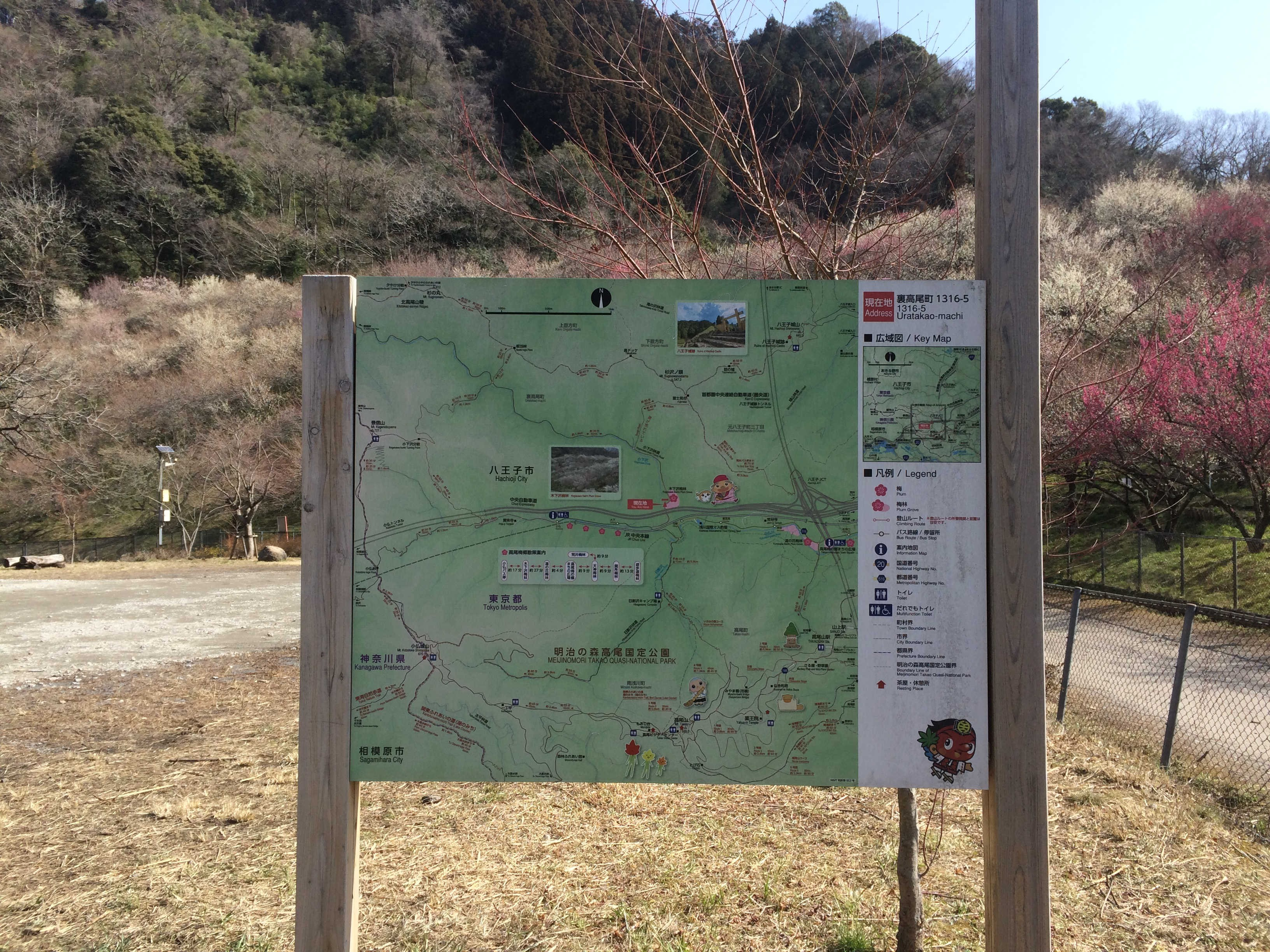 高尾梅郷散策案内図
