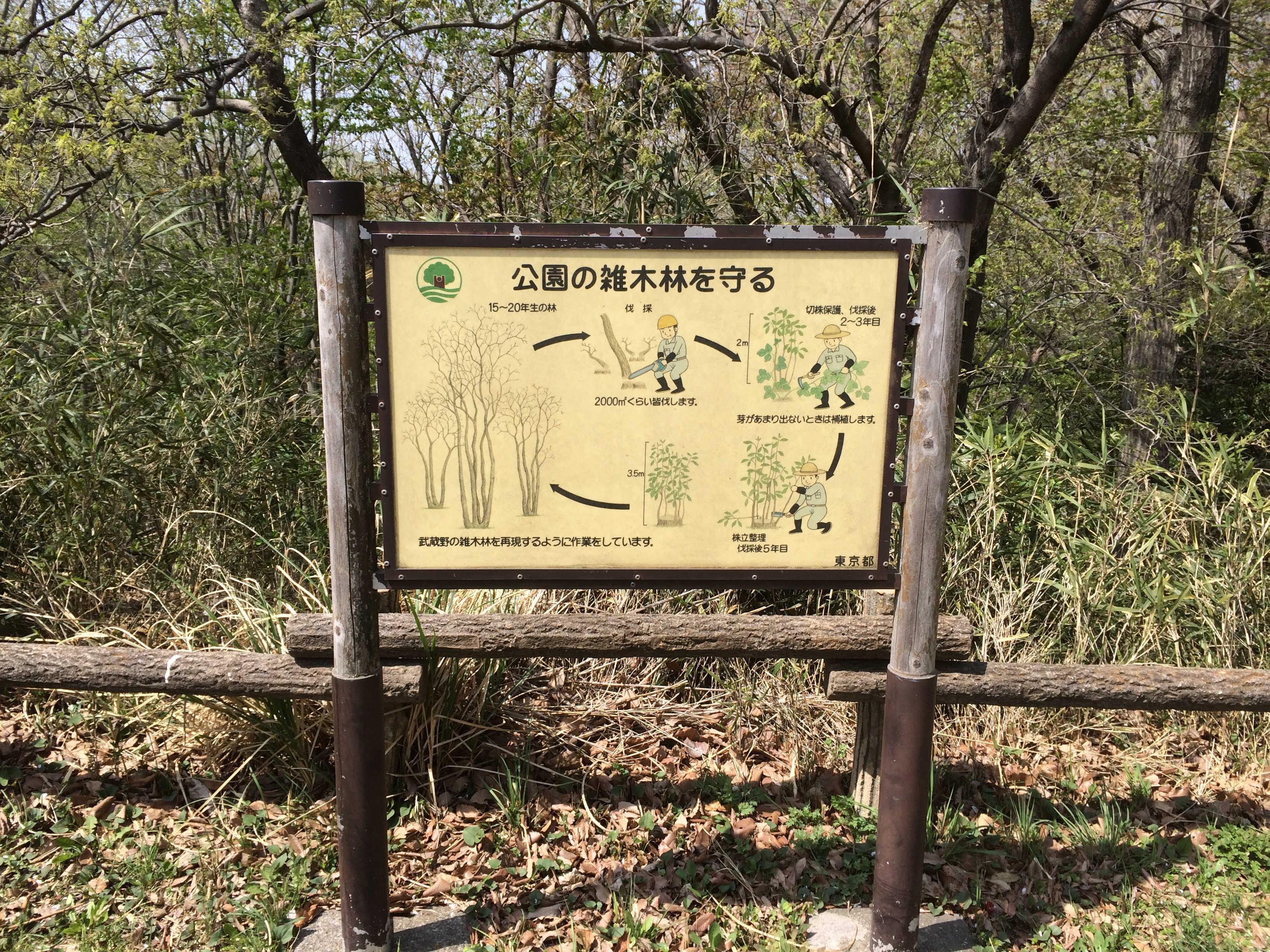 公園の雑木材を守る