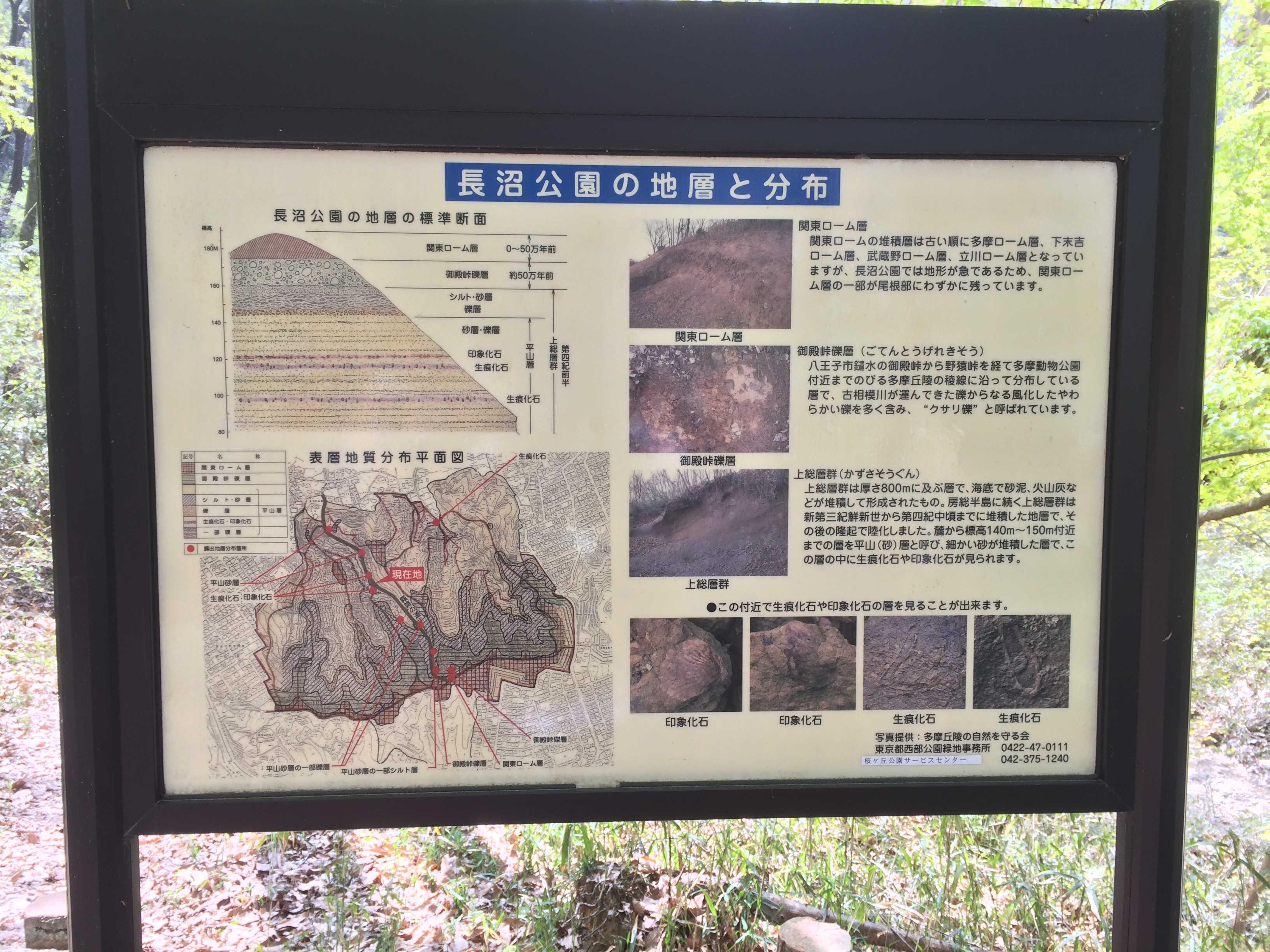 長沼公園の地層と分布