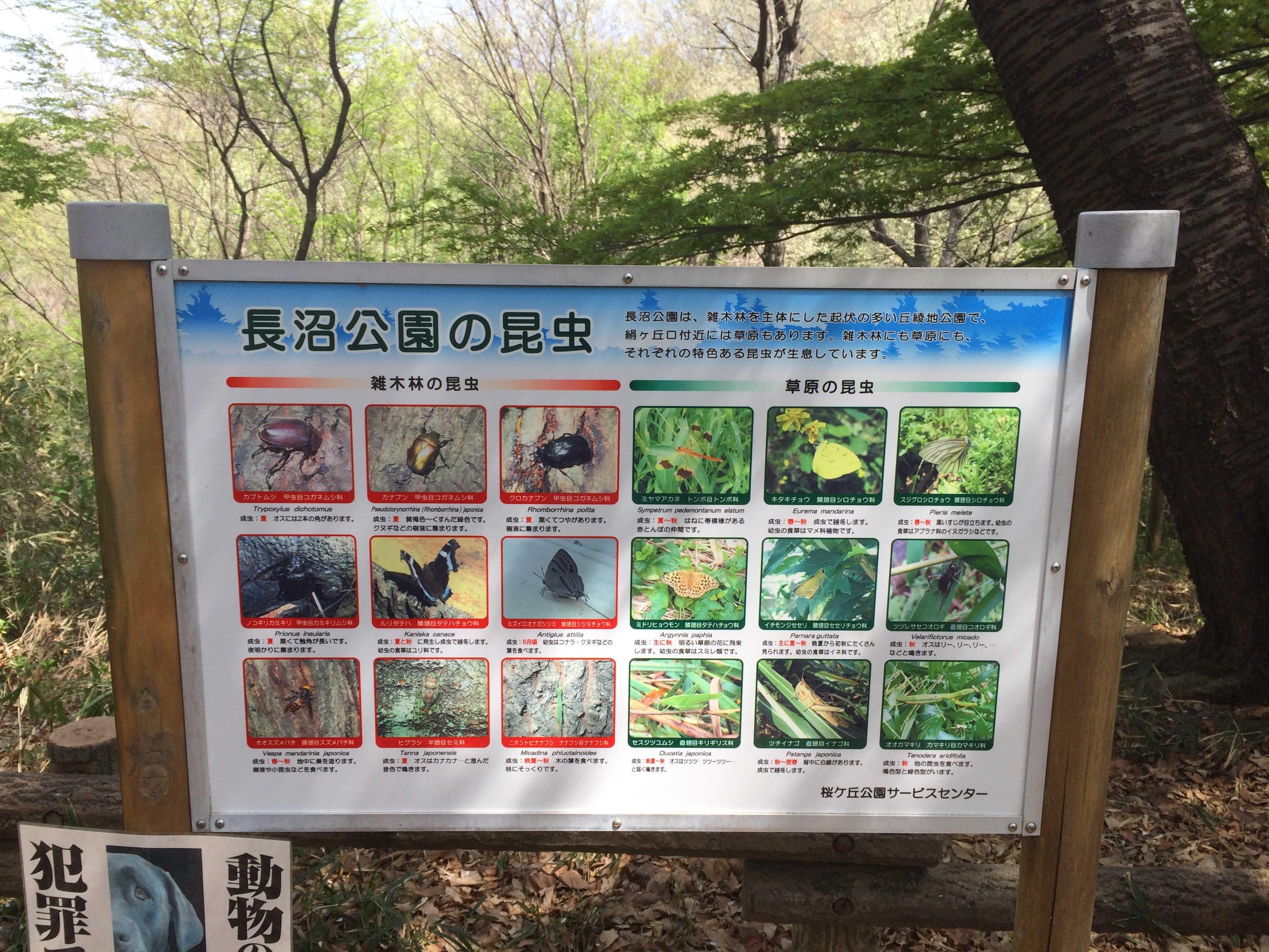 長沼公園の昆虫