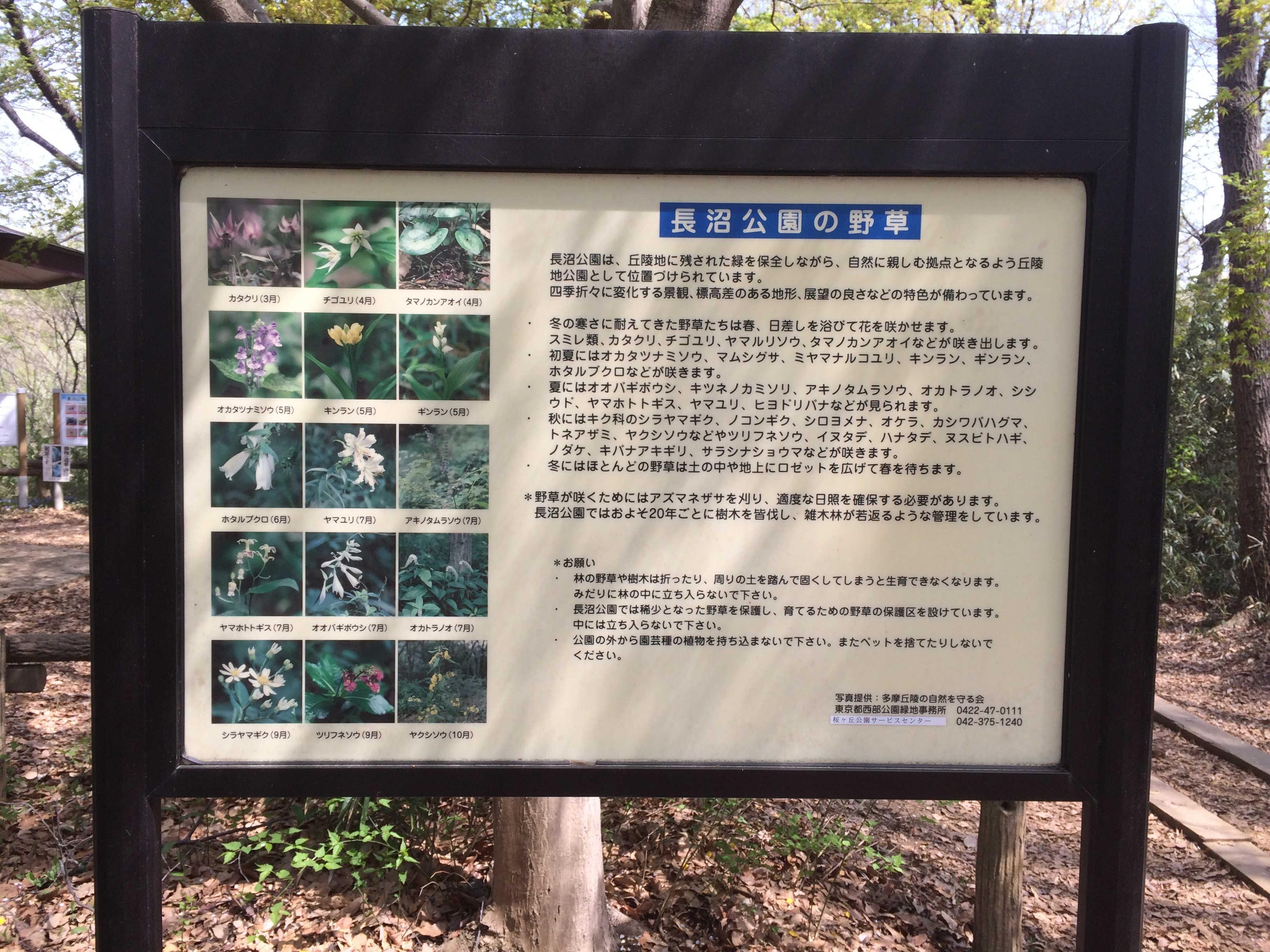 長沼公園の野草