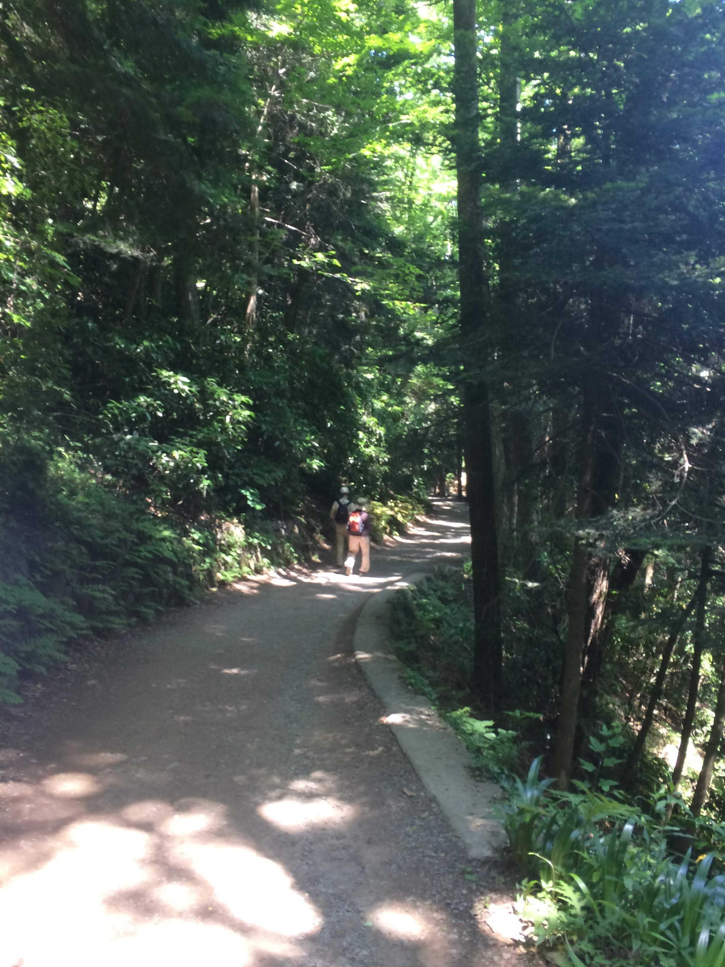 登山コース3号路