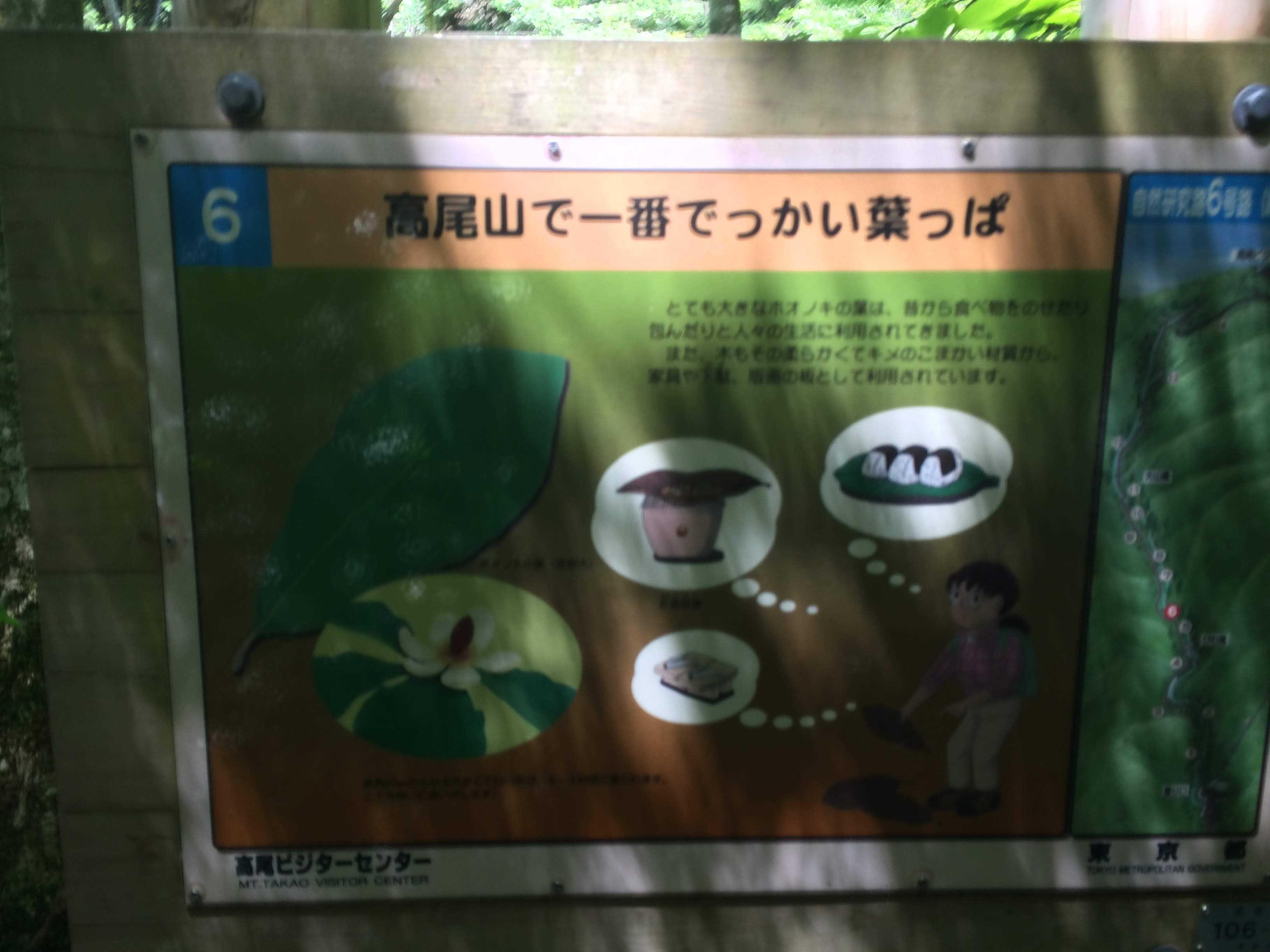 高尾山で一番でっかい葉っぱ