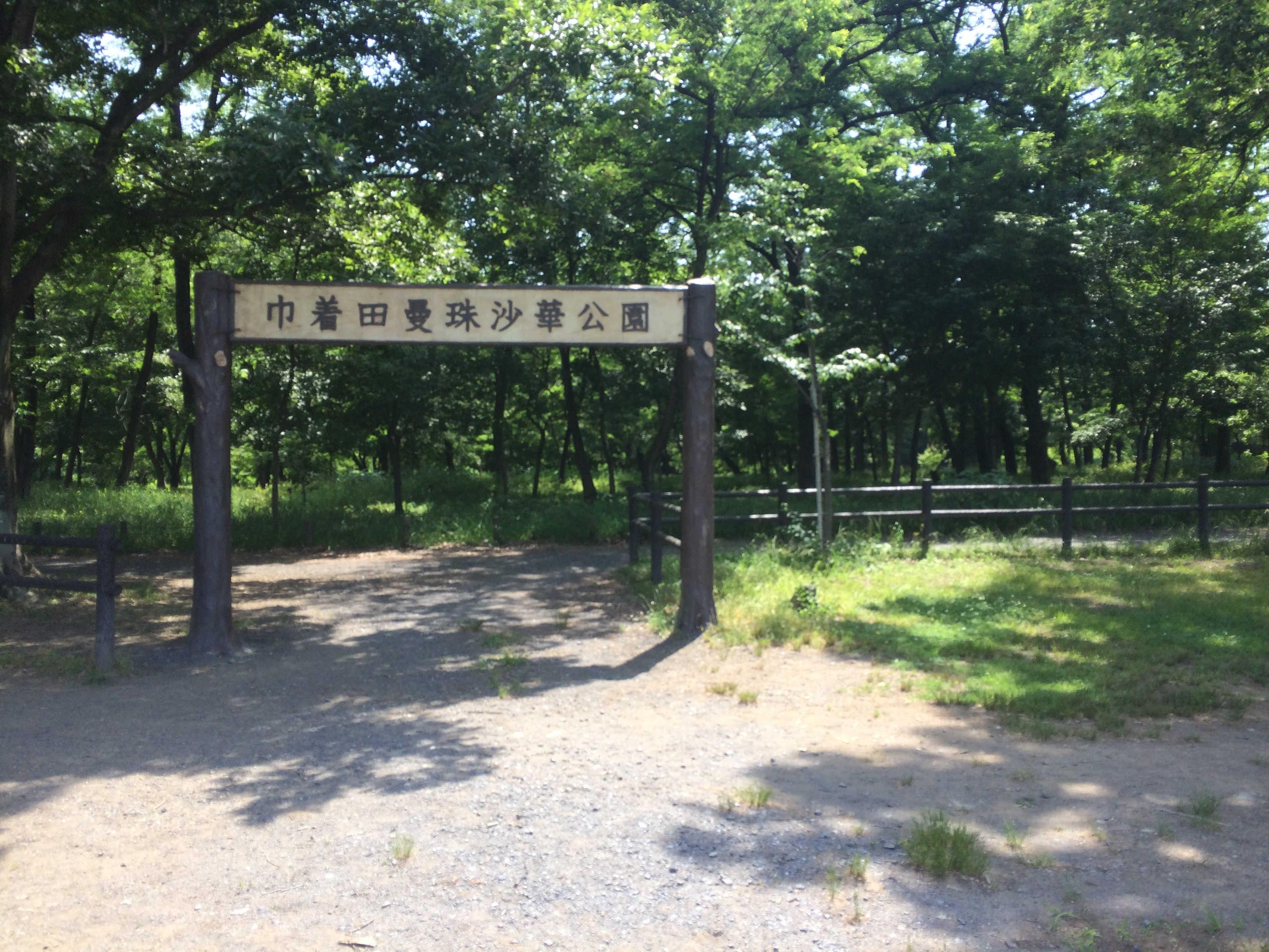 巾着田曼珠沙華公園