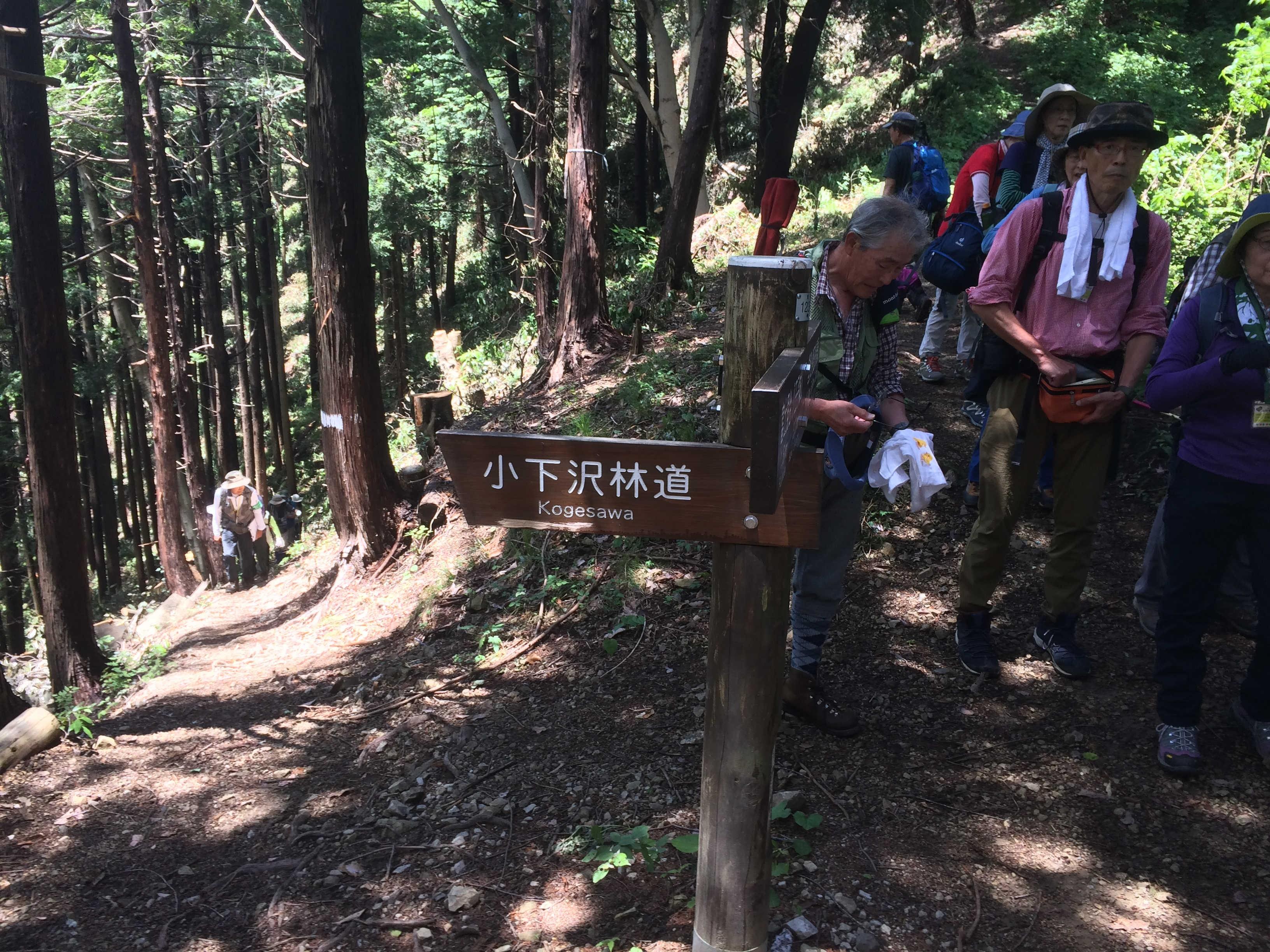 ←小下沢林道