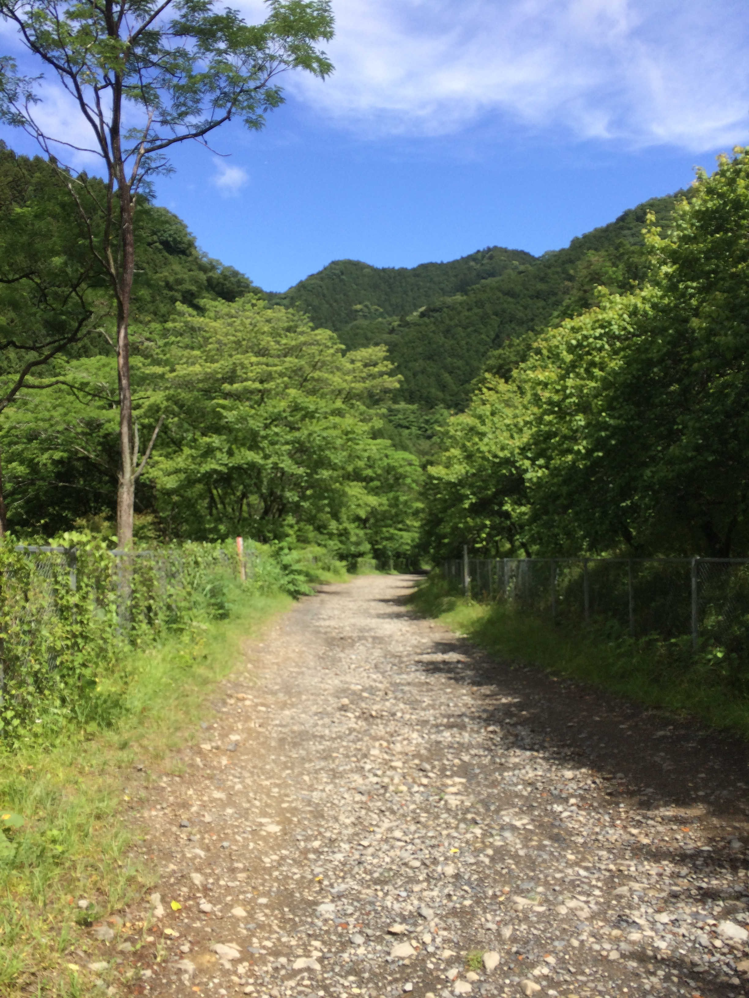 木下沢林道までの一般道