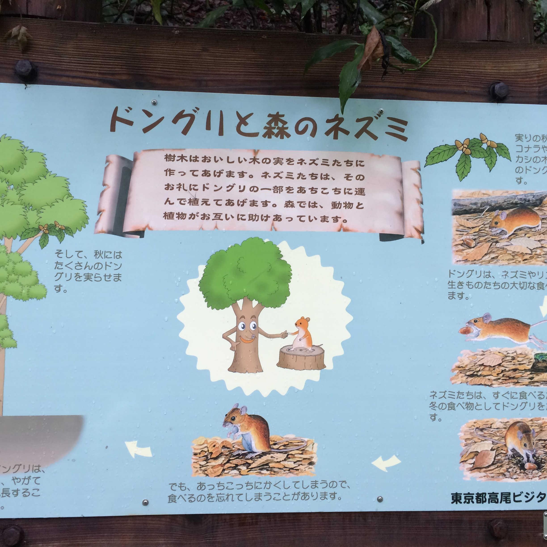 ドングリと森のネズミ