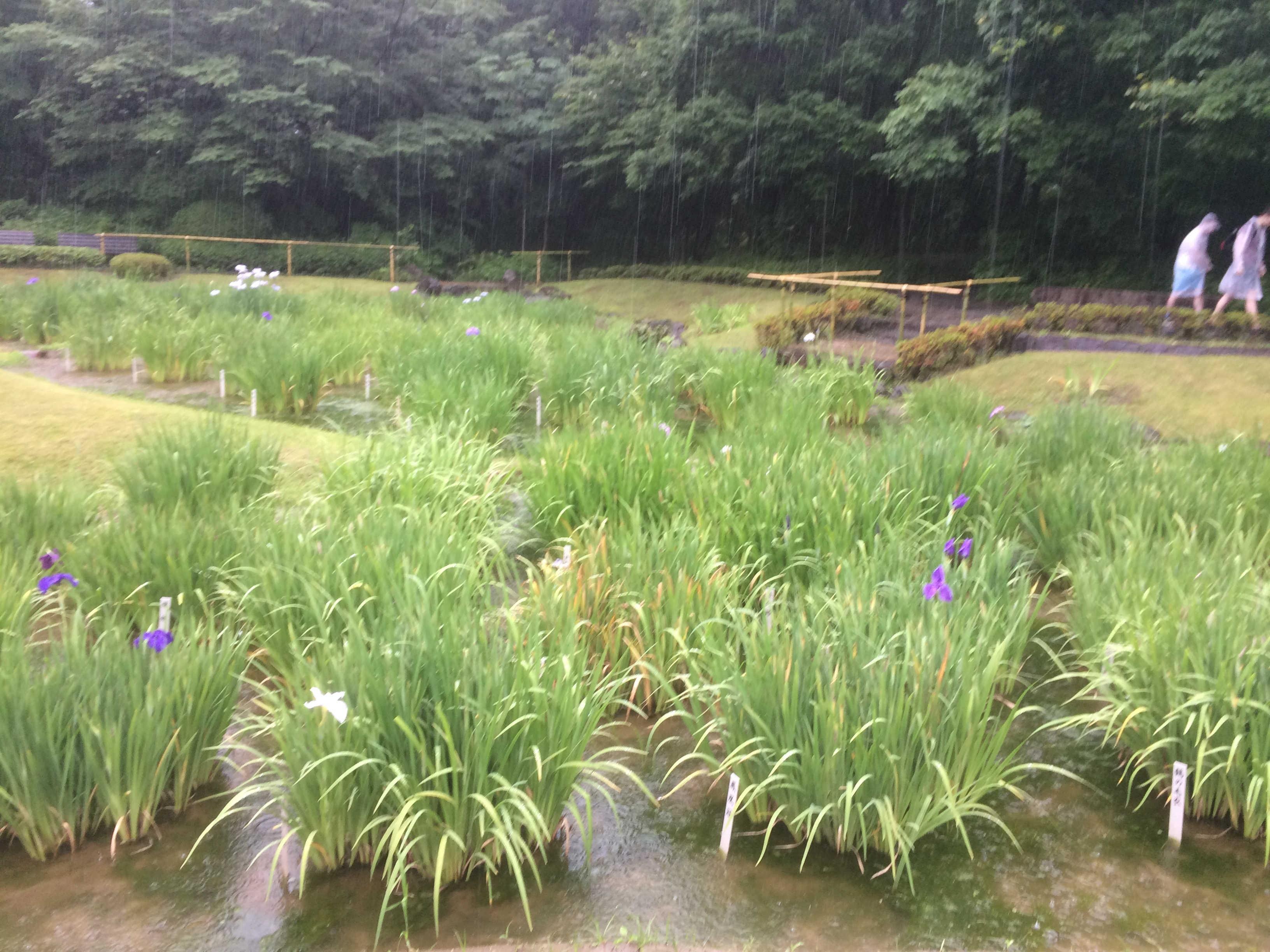 皇居東御苑二の丸庭園