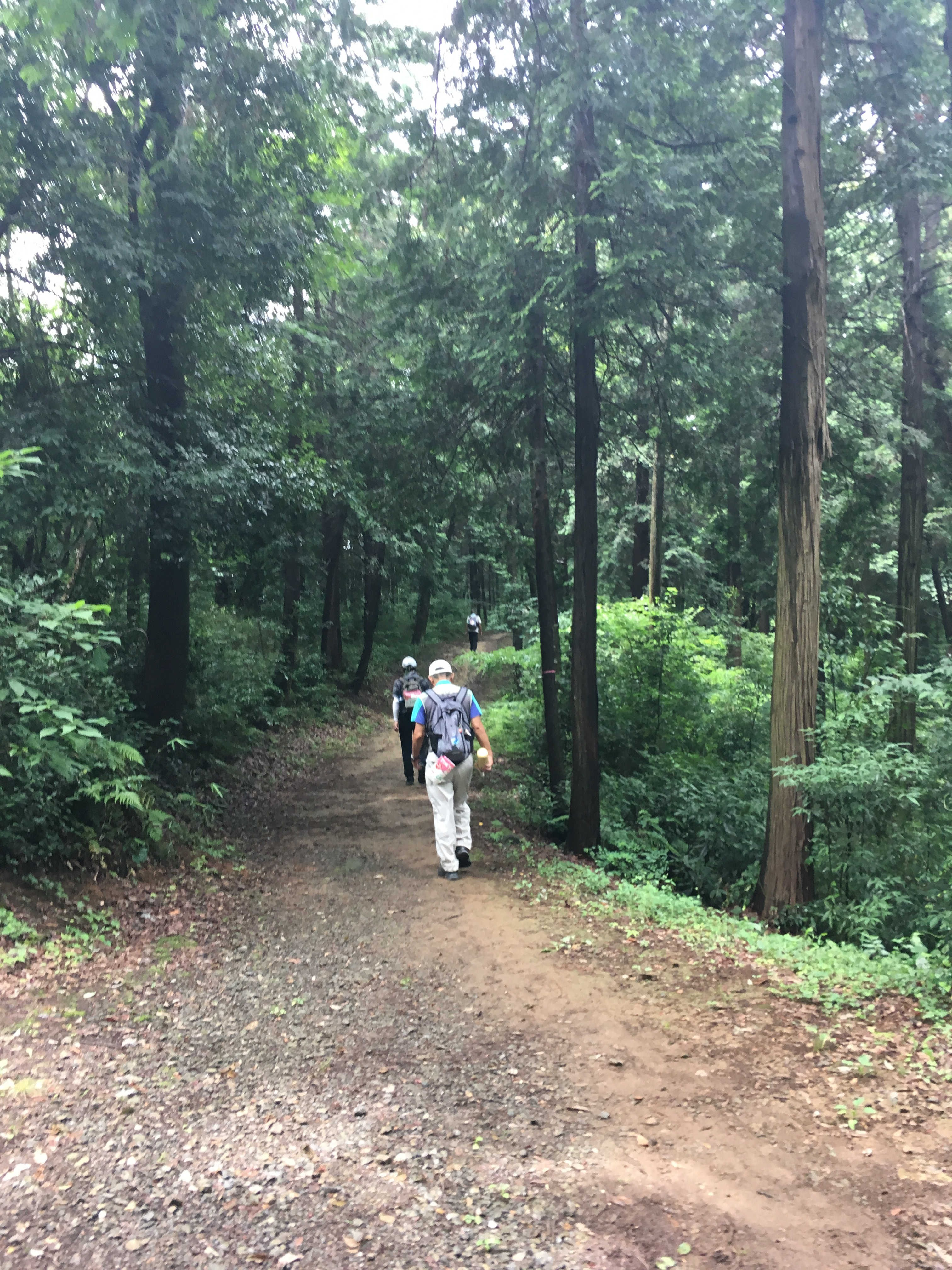 高根山遊歩道