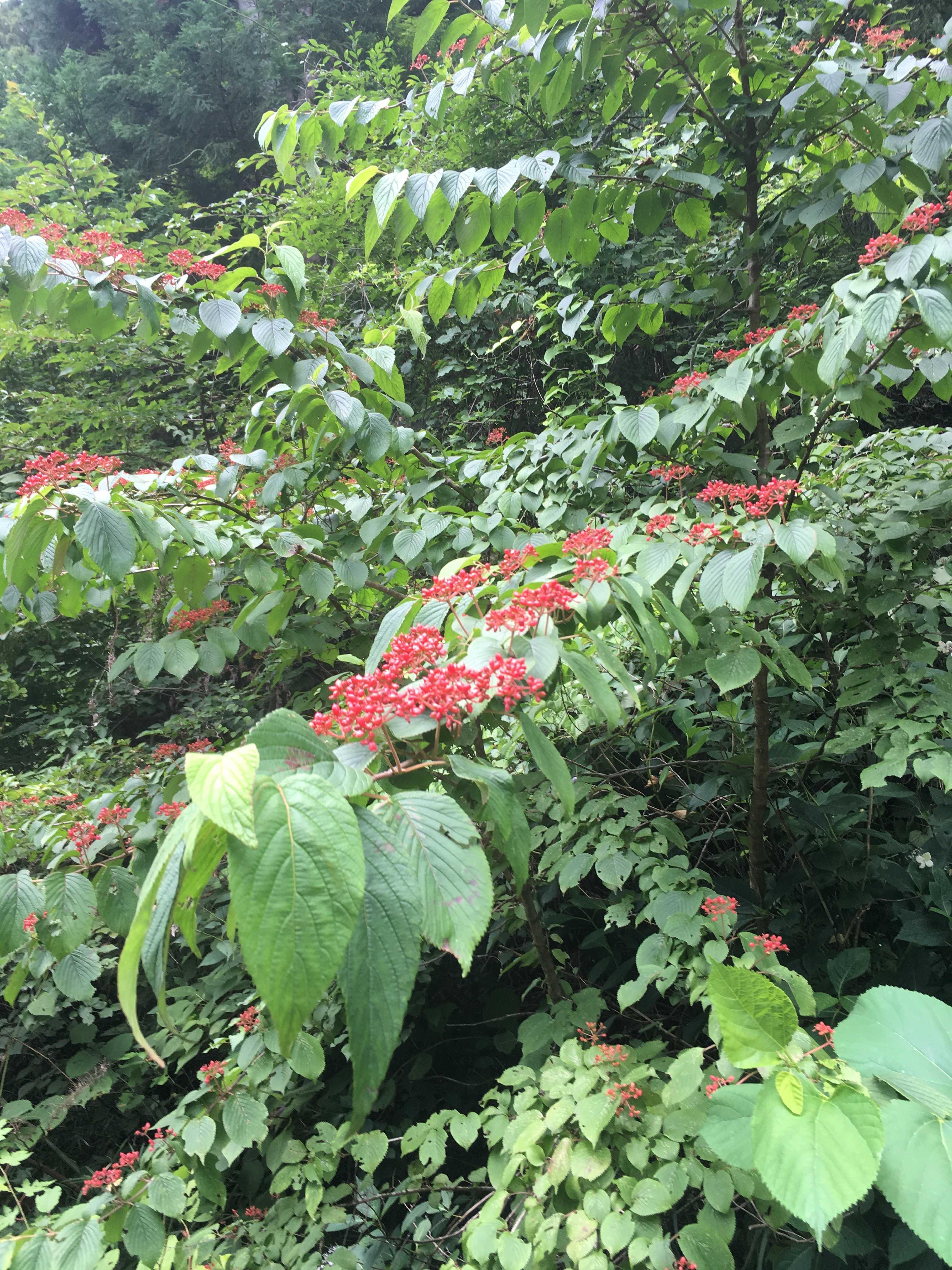 高尾山自然休養林
