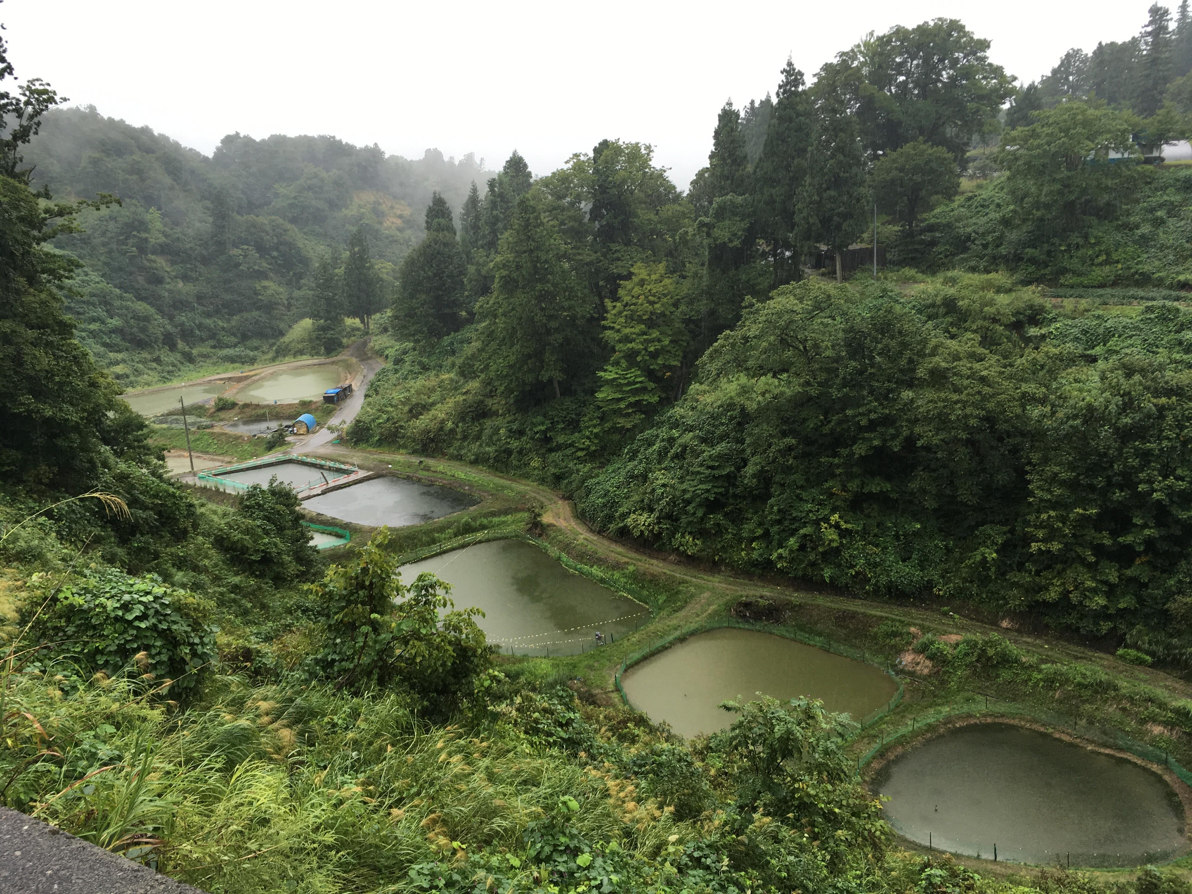 新潟県道23号山古志東竹沢線からの風景