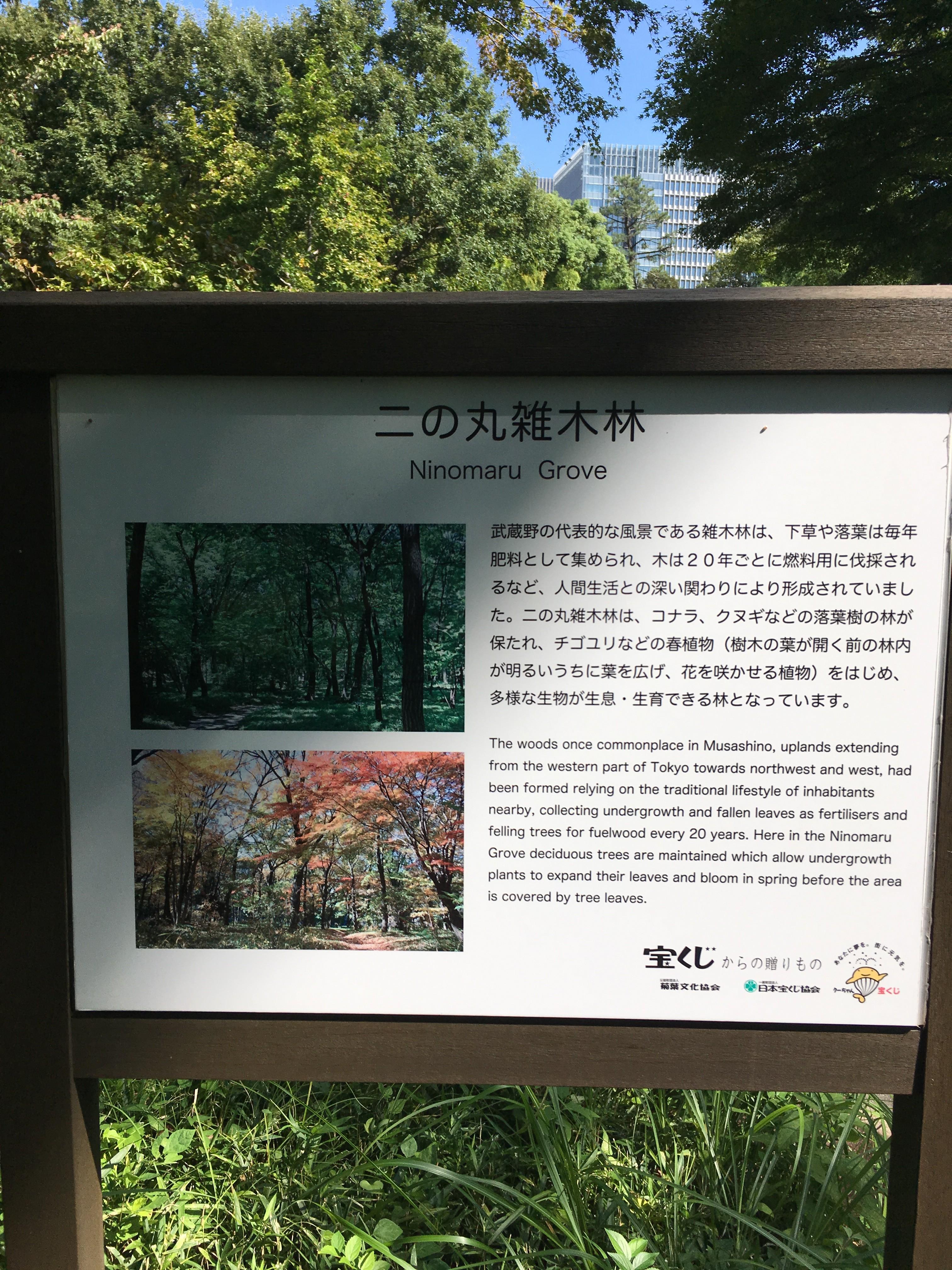 二の丸雑木林
