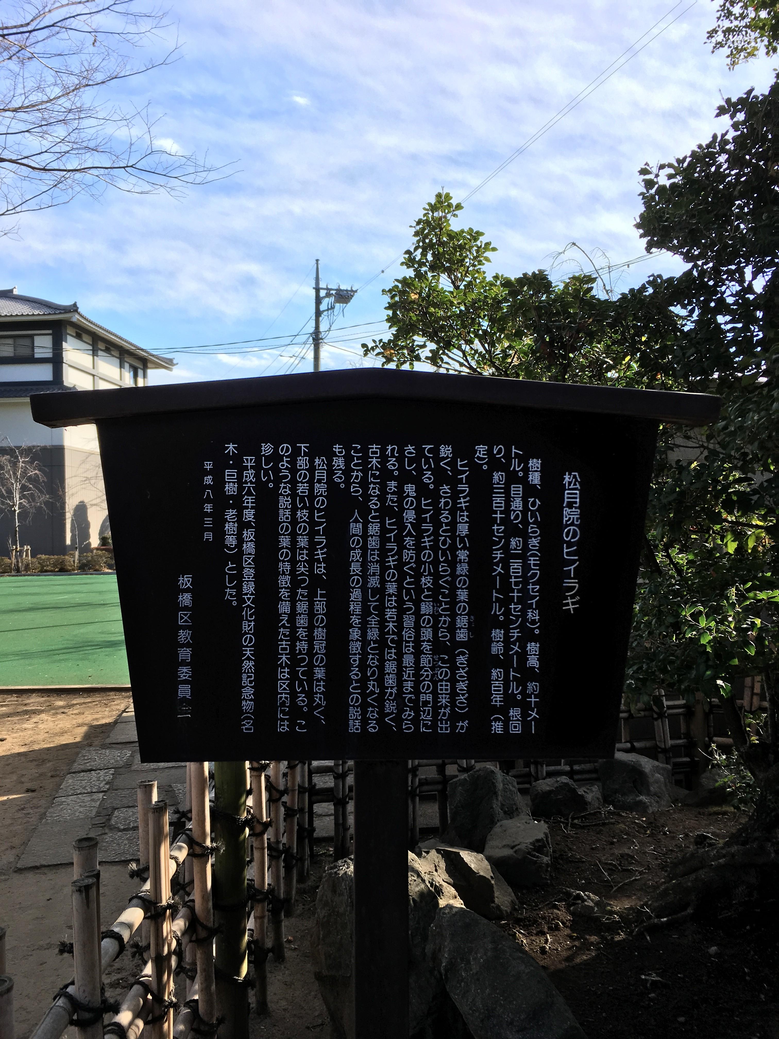 松月院のヒイラギ