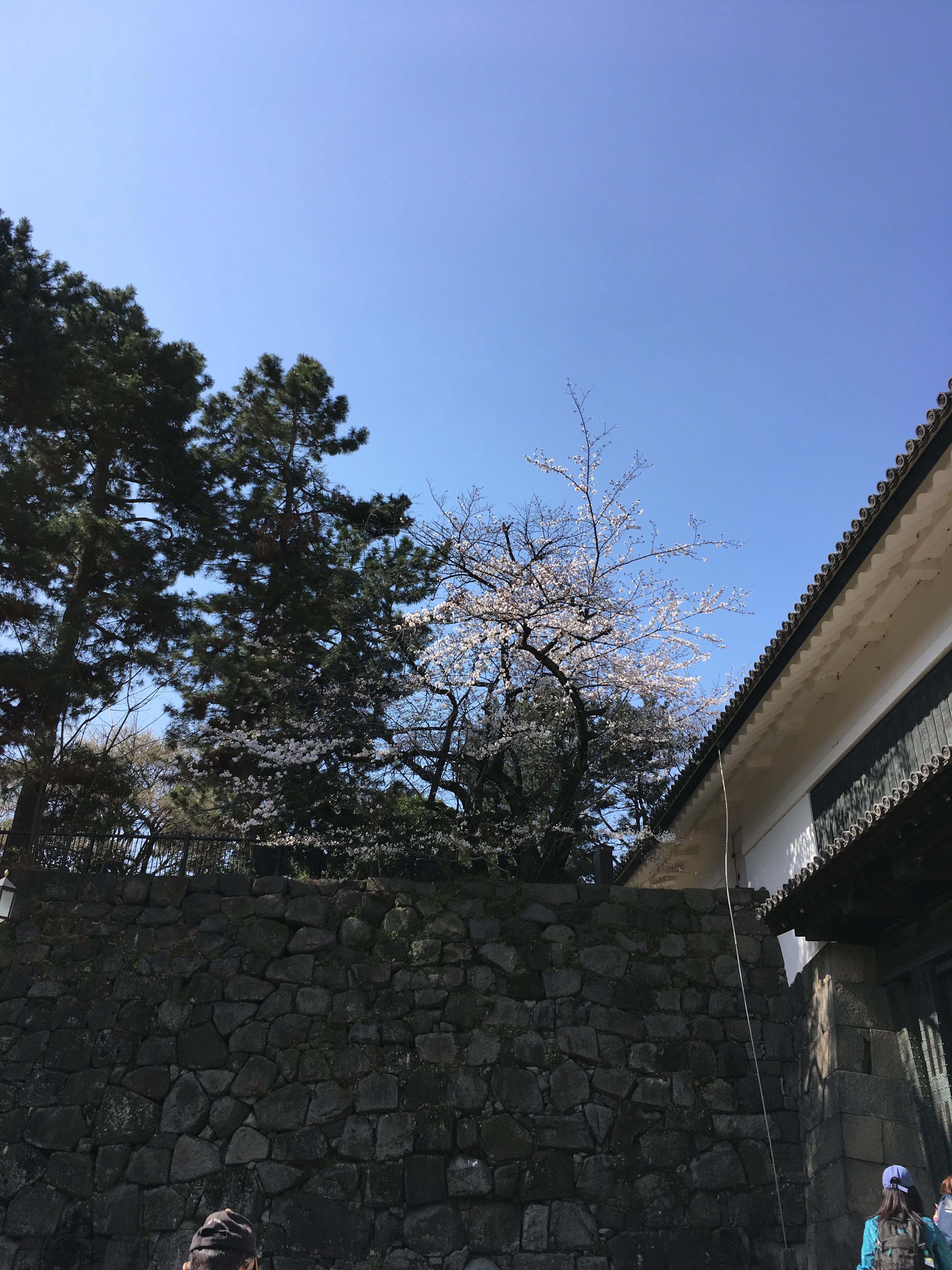 清水門石垣