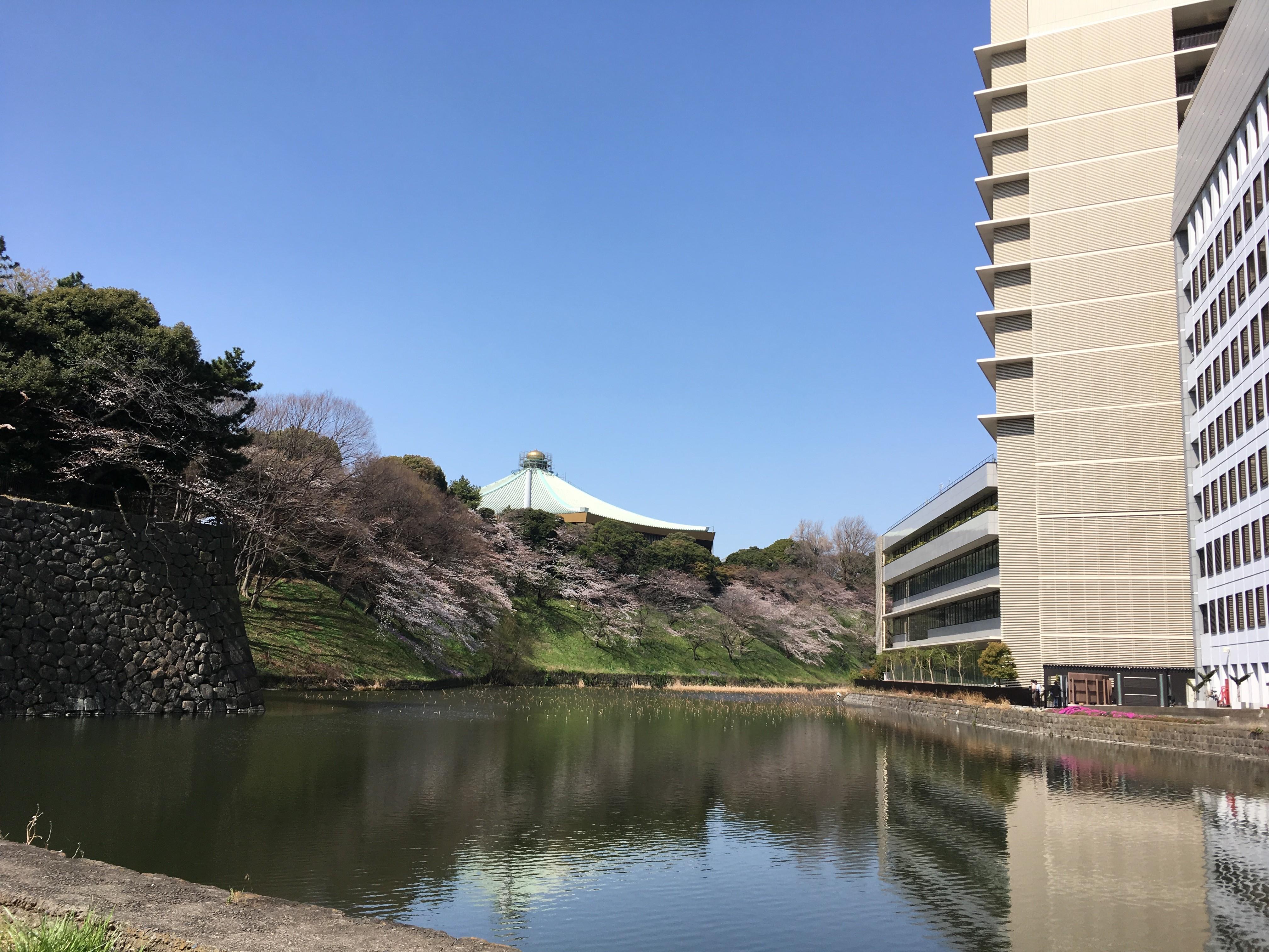 清水門遊歩道から武道館を望む