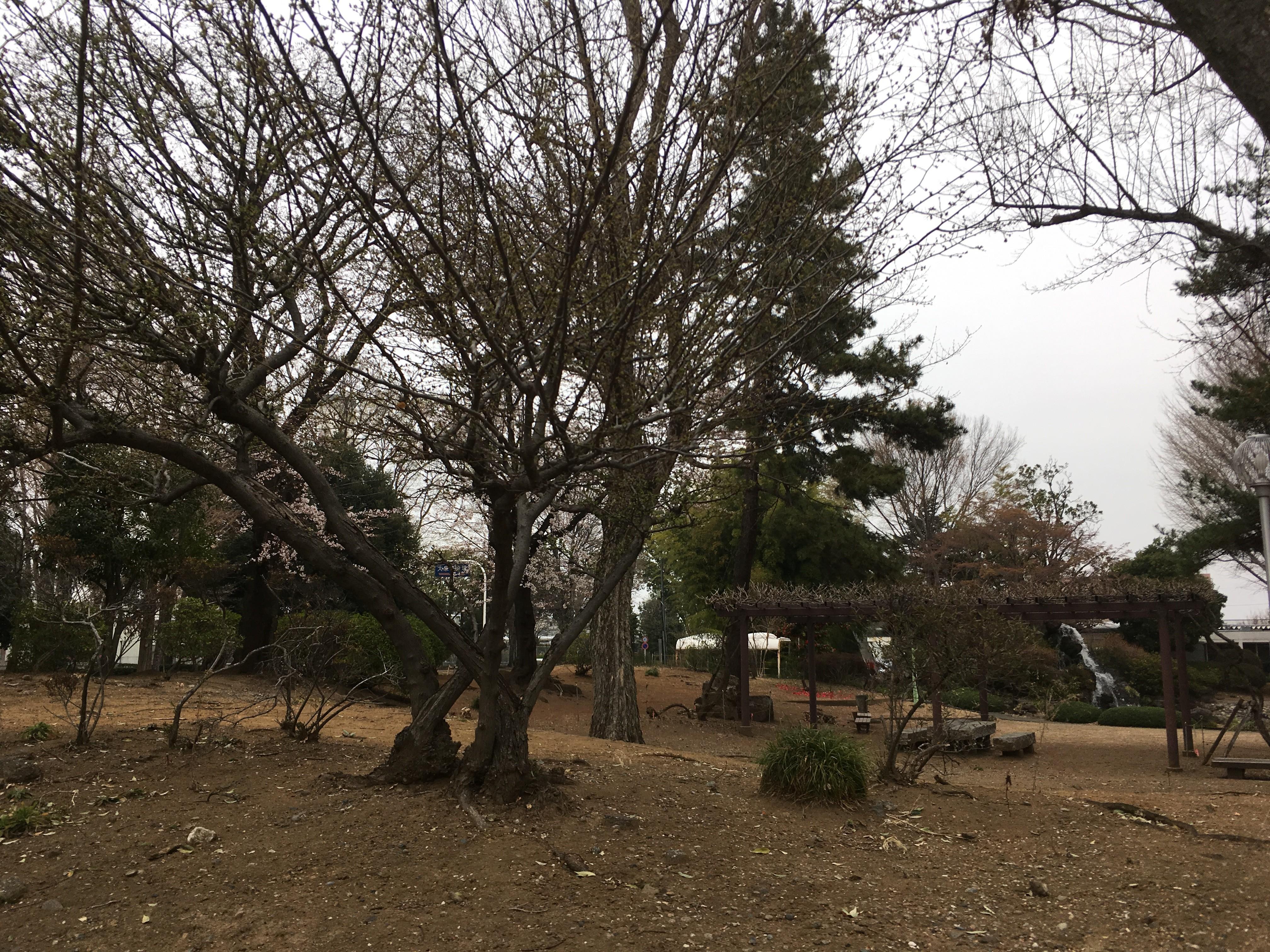 大泉町中央公園