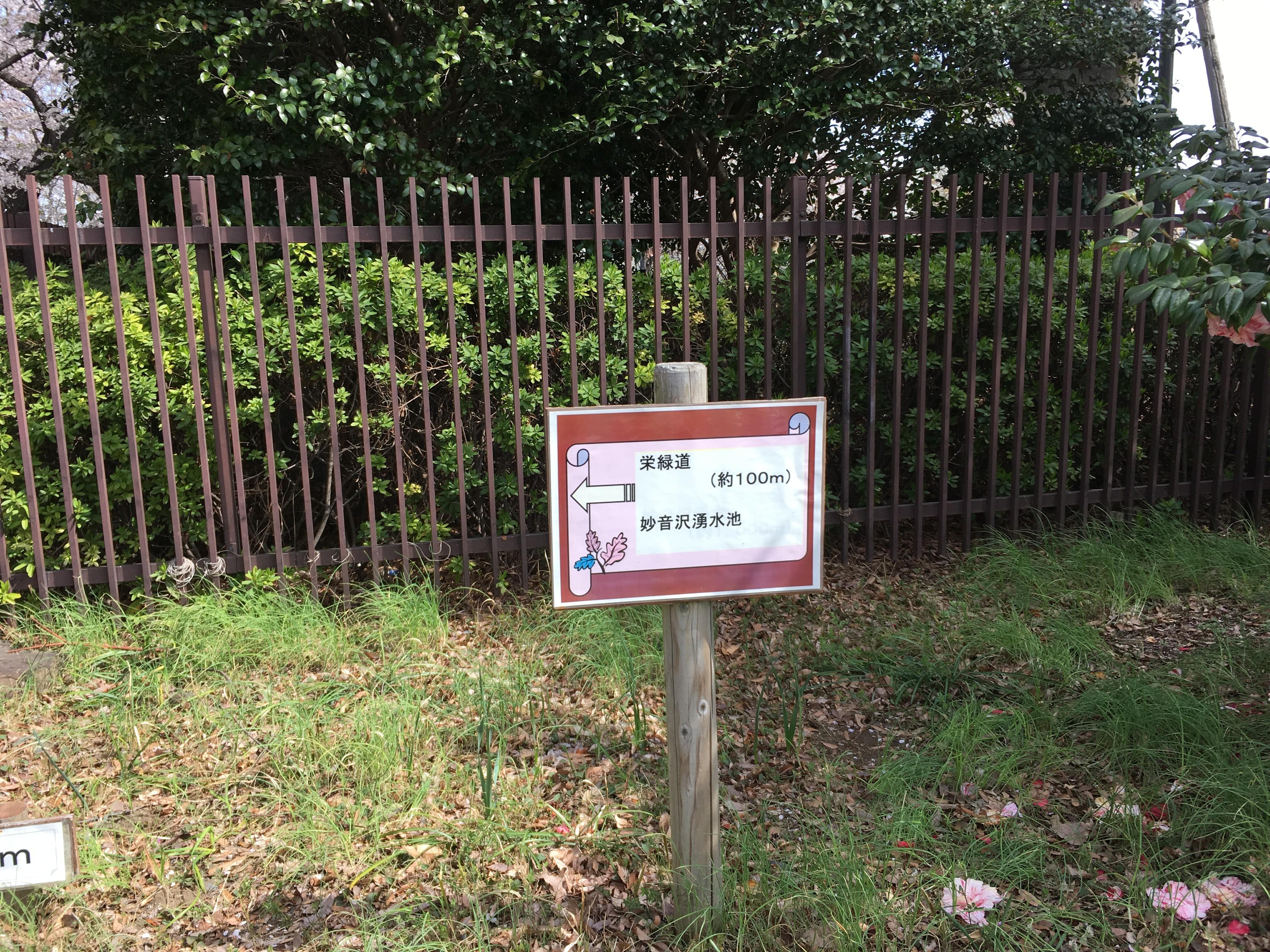 ←栄緑道・妙音沢溜水池(新座緑道終わり)
