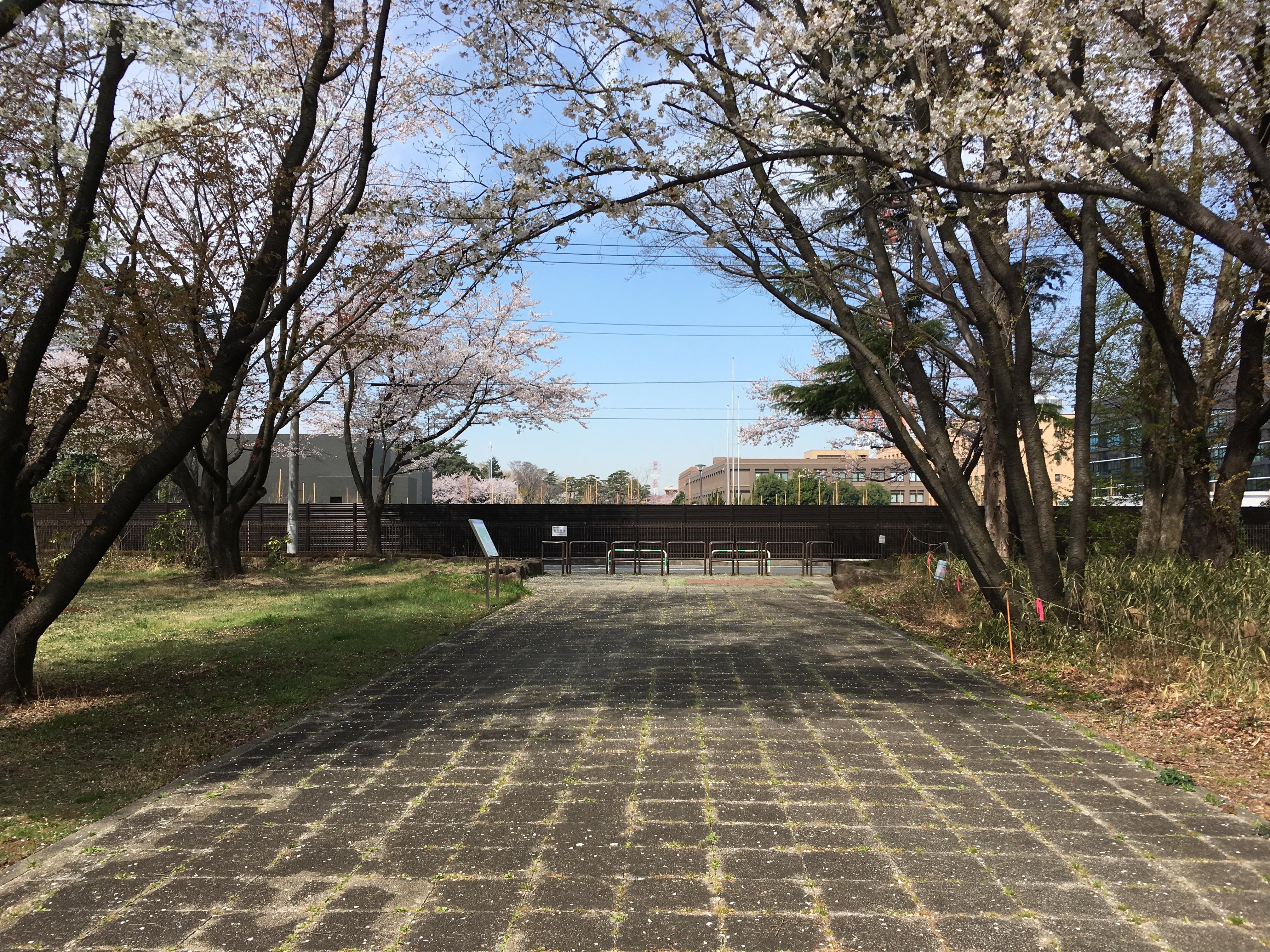 埼玉県営和光樹林公園