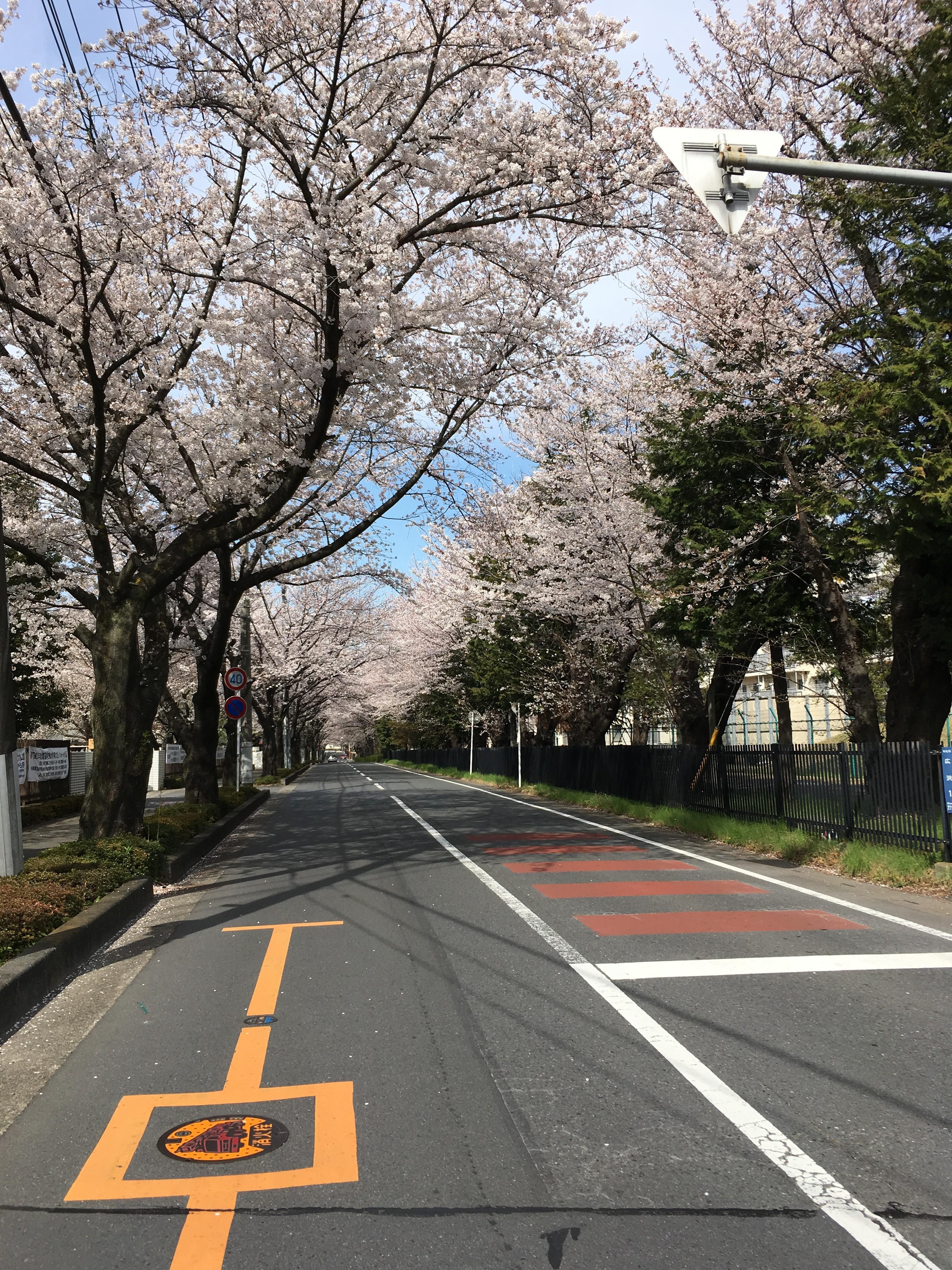 埼玉県立和光国際高等学校