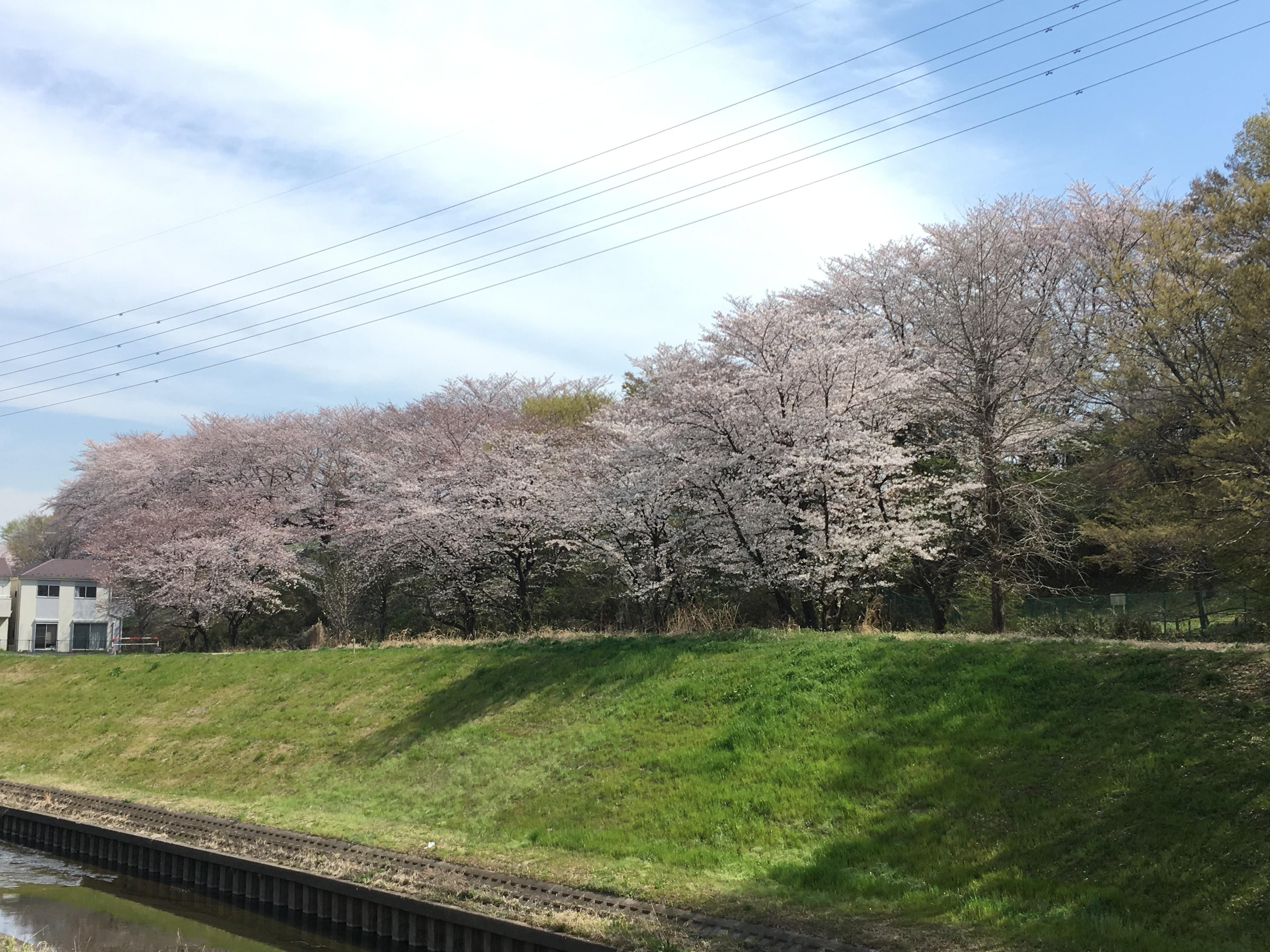 黒目川遊歩道から右岸遊歩道