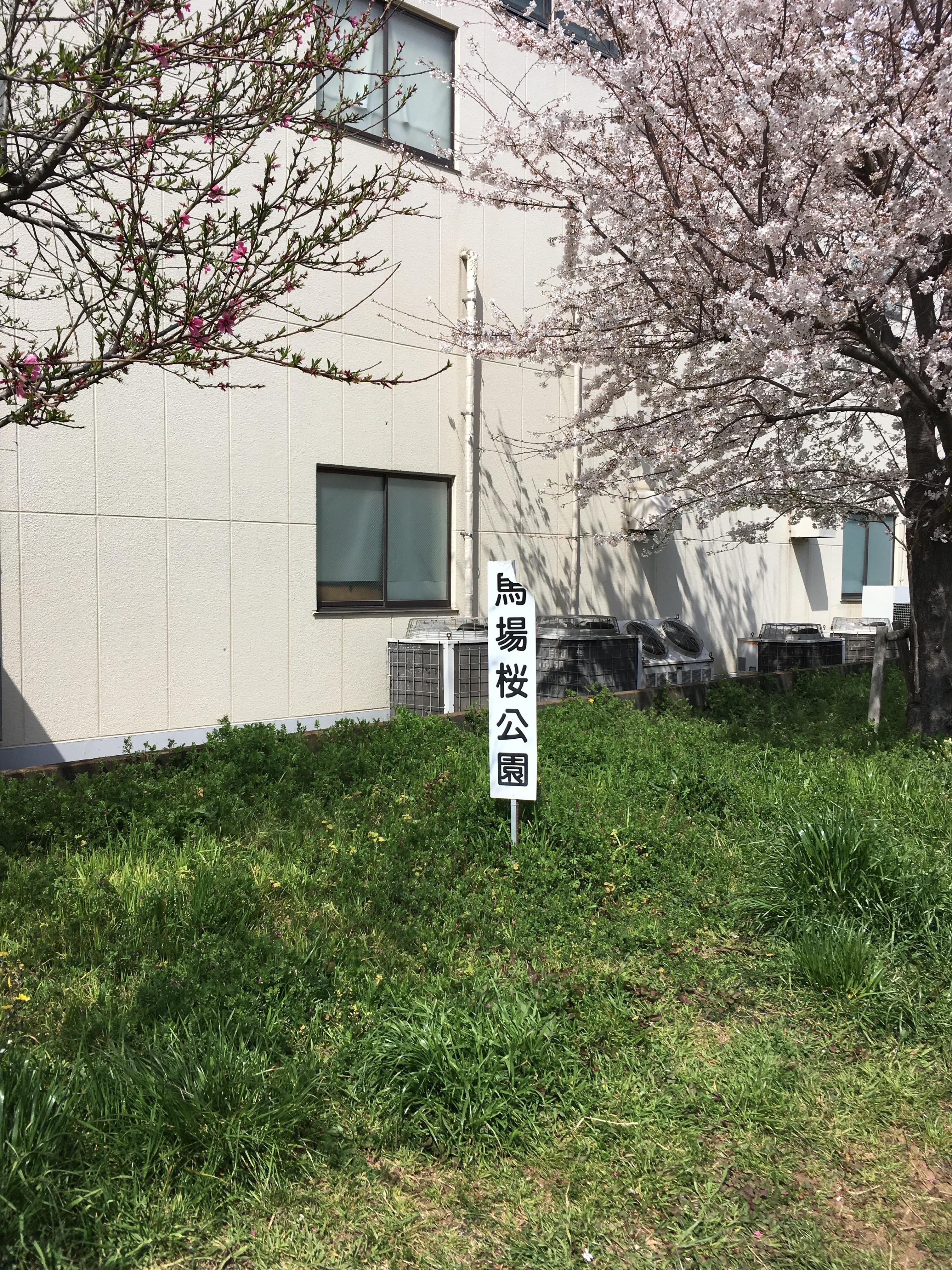 黒目川遊歩道の馬場桜公園