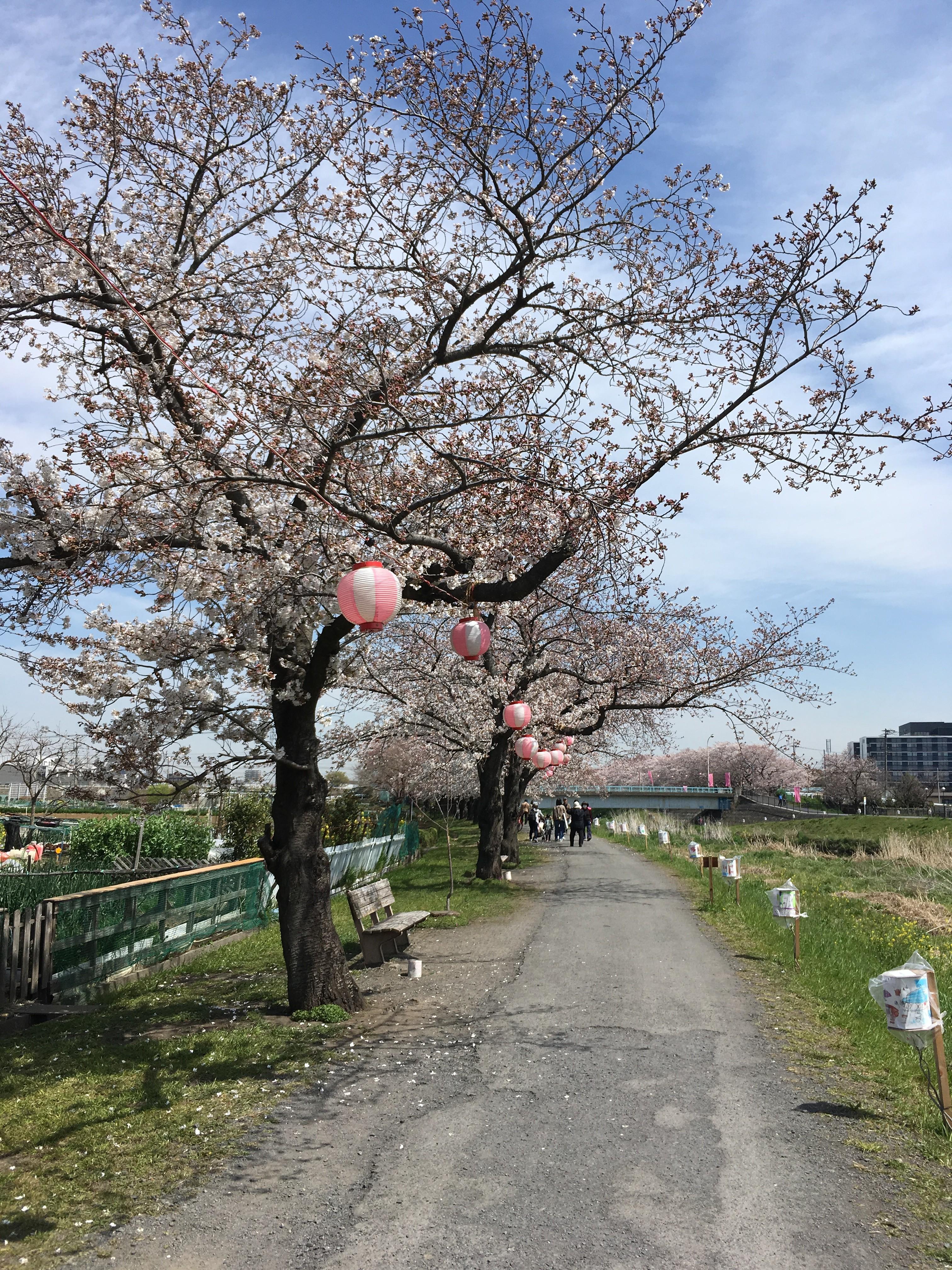 黒目川遊歩道