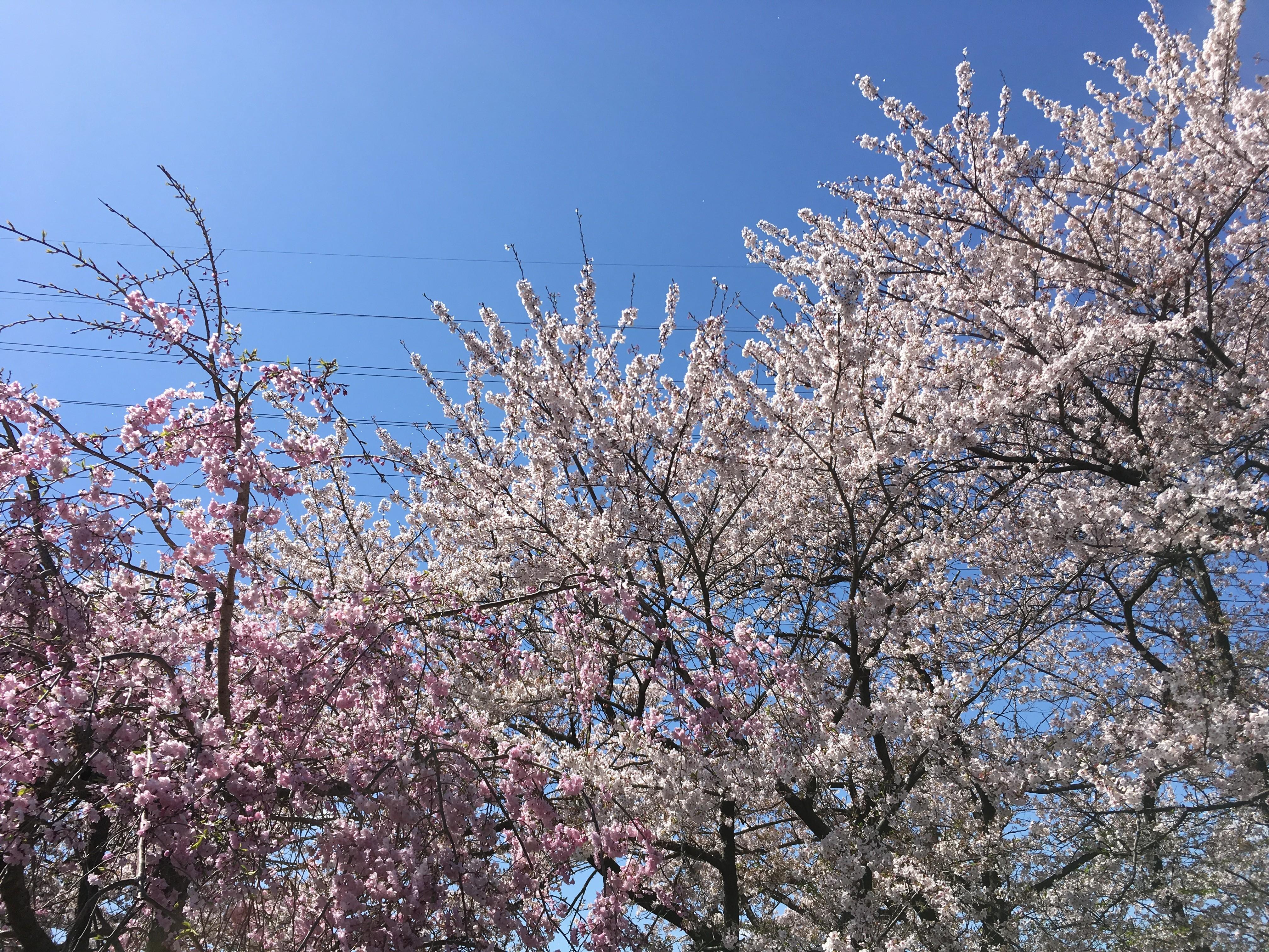 ケアハウス桜の里