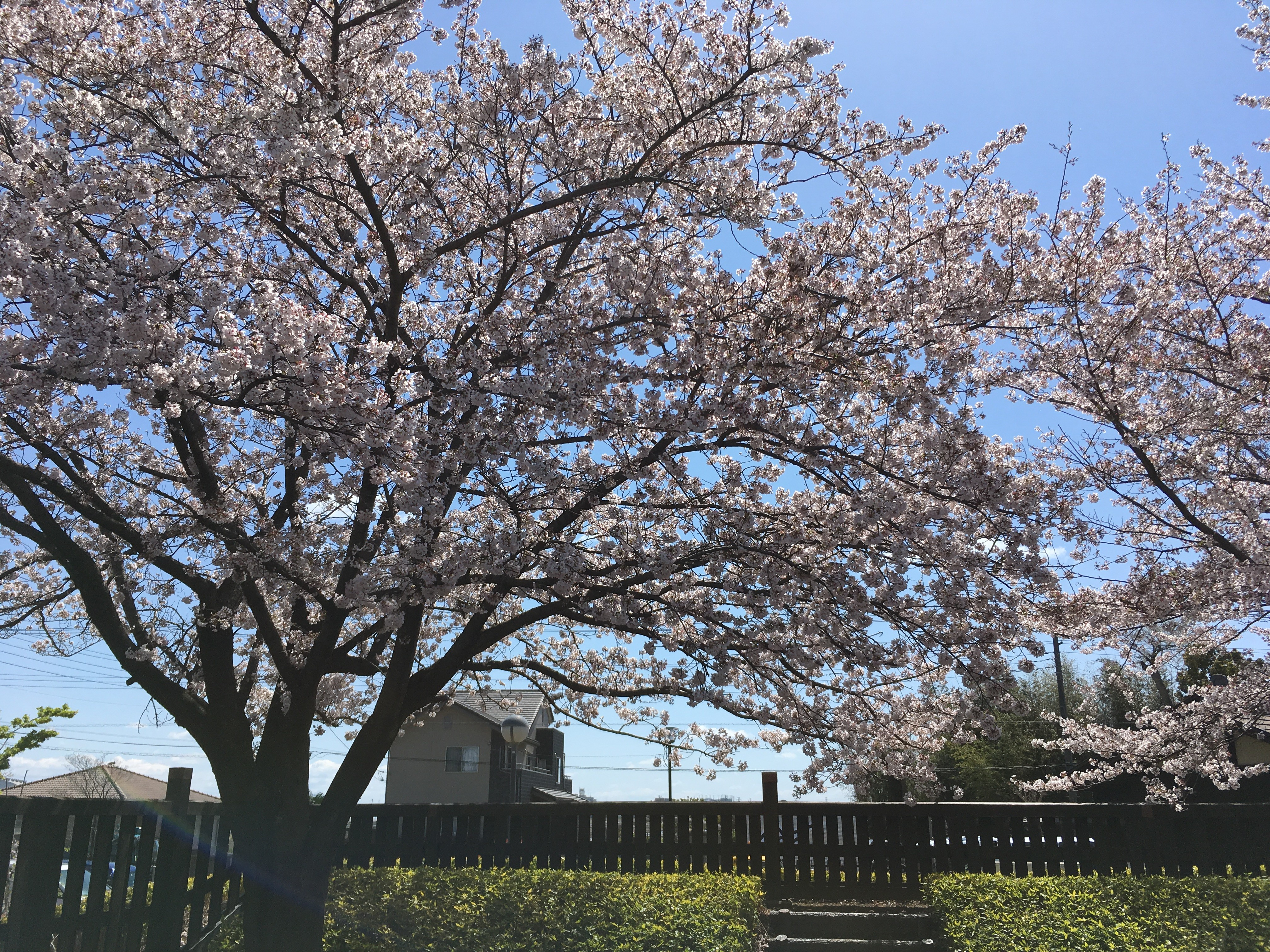 難波田城公園