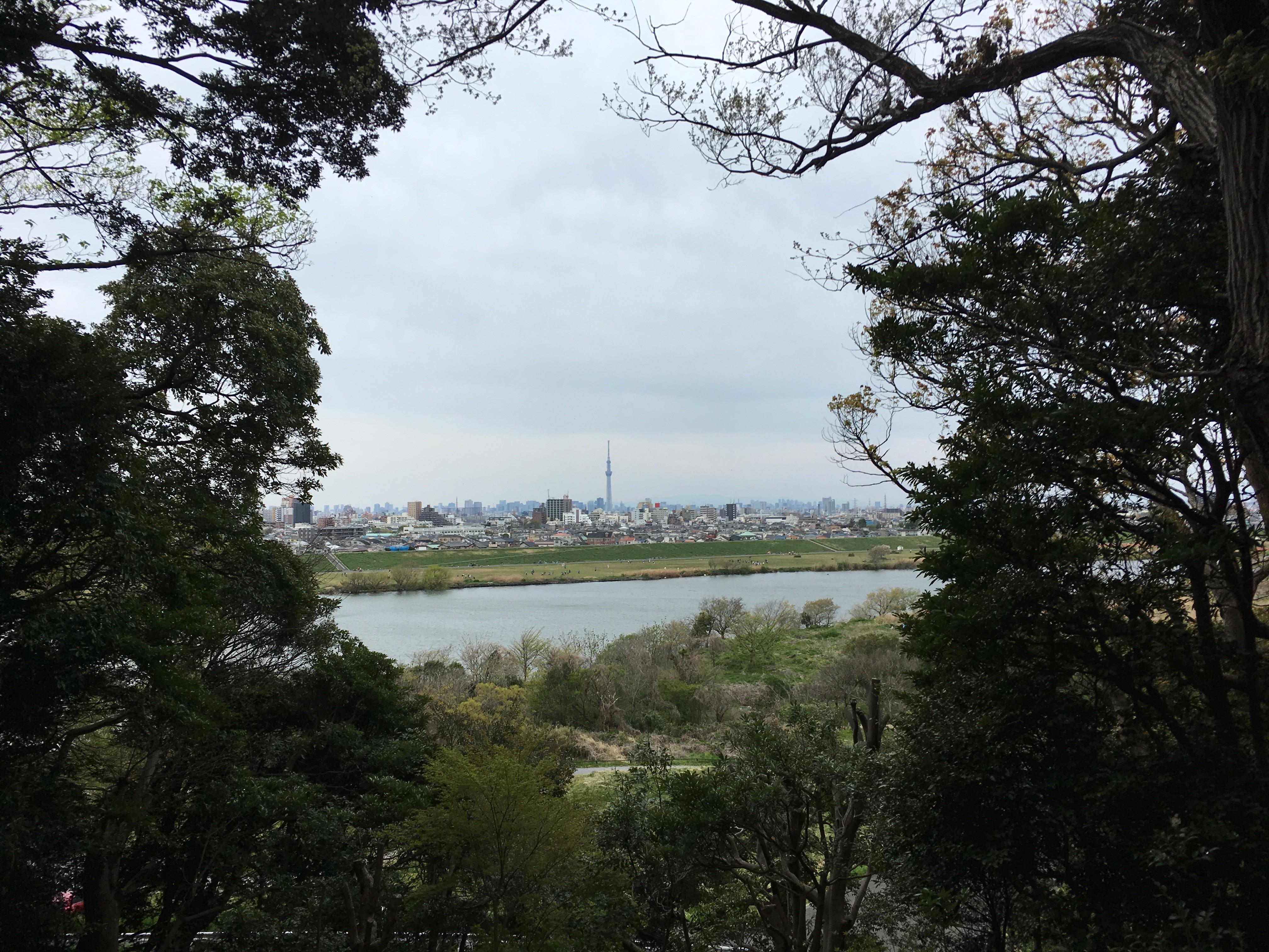 里見公園からスカイツリーを望む