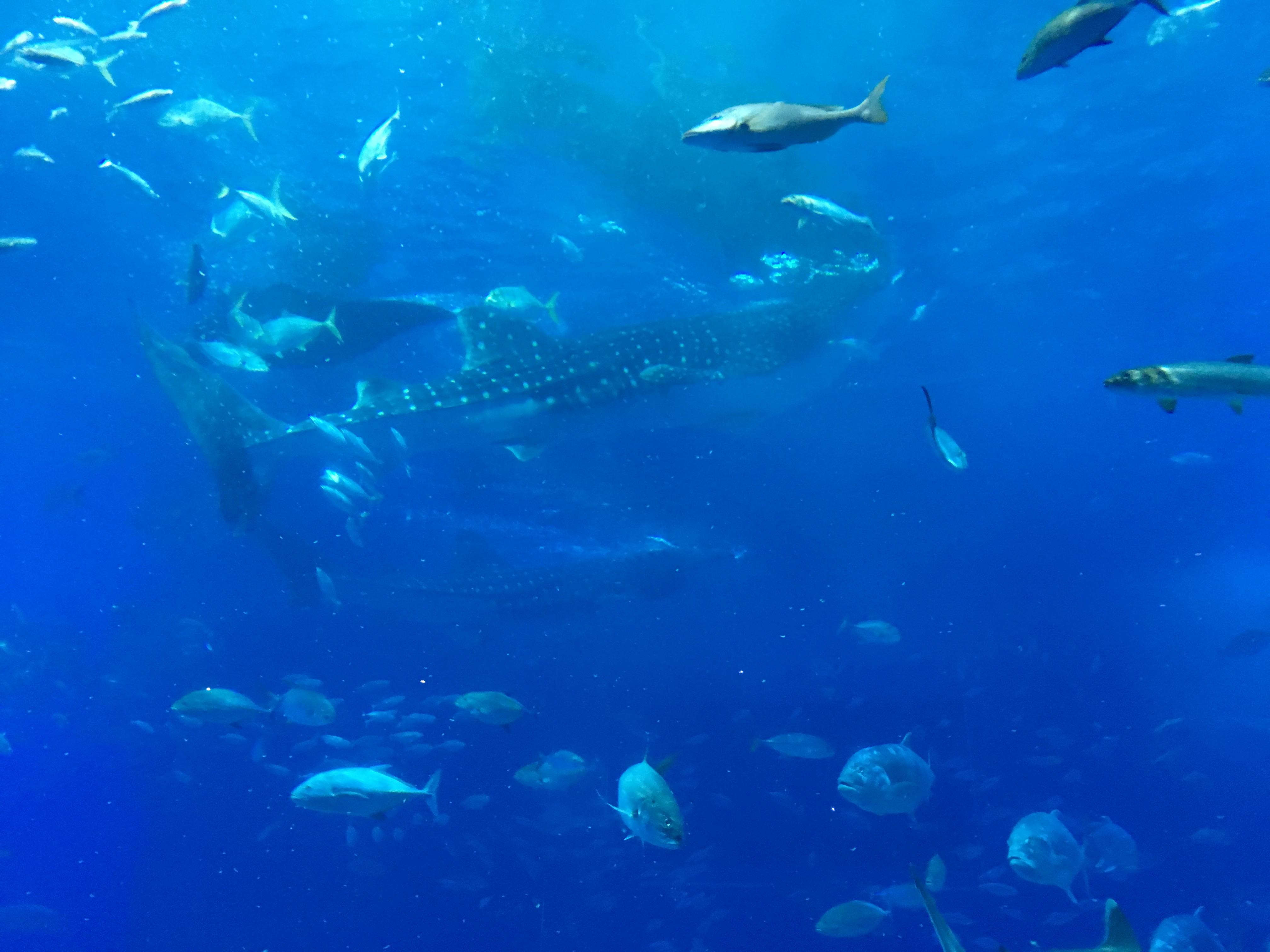 沖縄美ら海水族館内